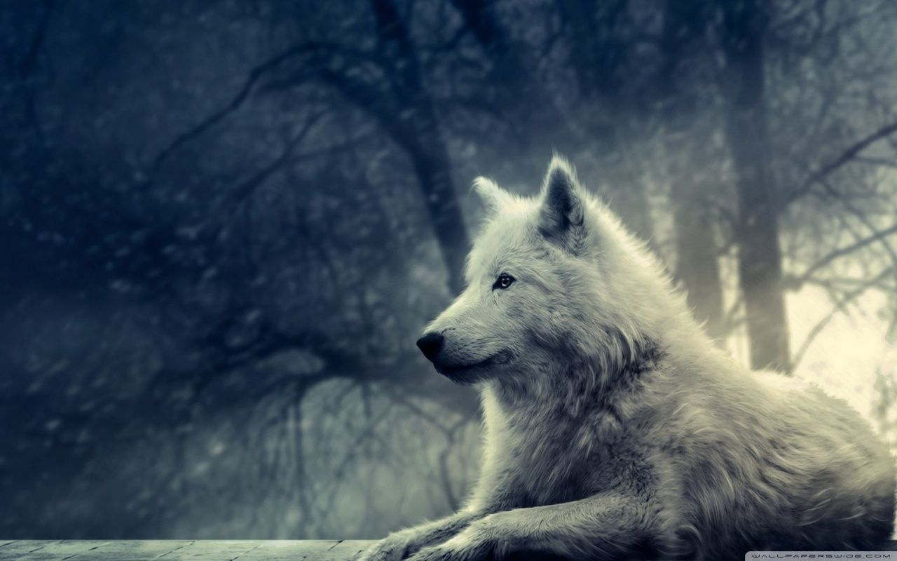 Cute Wolf Wallpapers Top Free Cute Wolf Backgrounds Wallpaperaccess