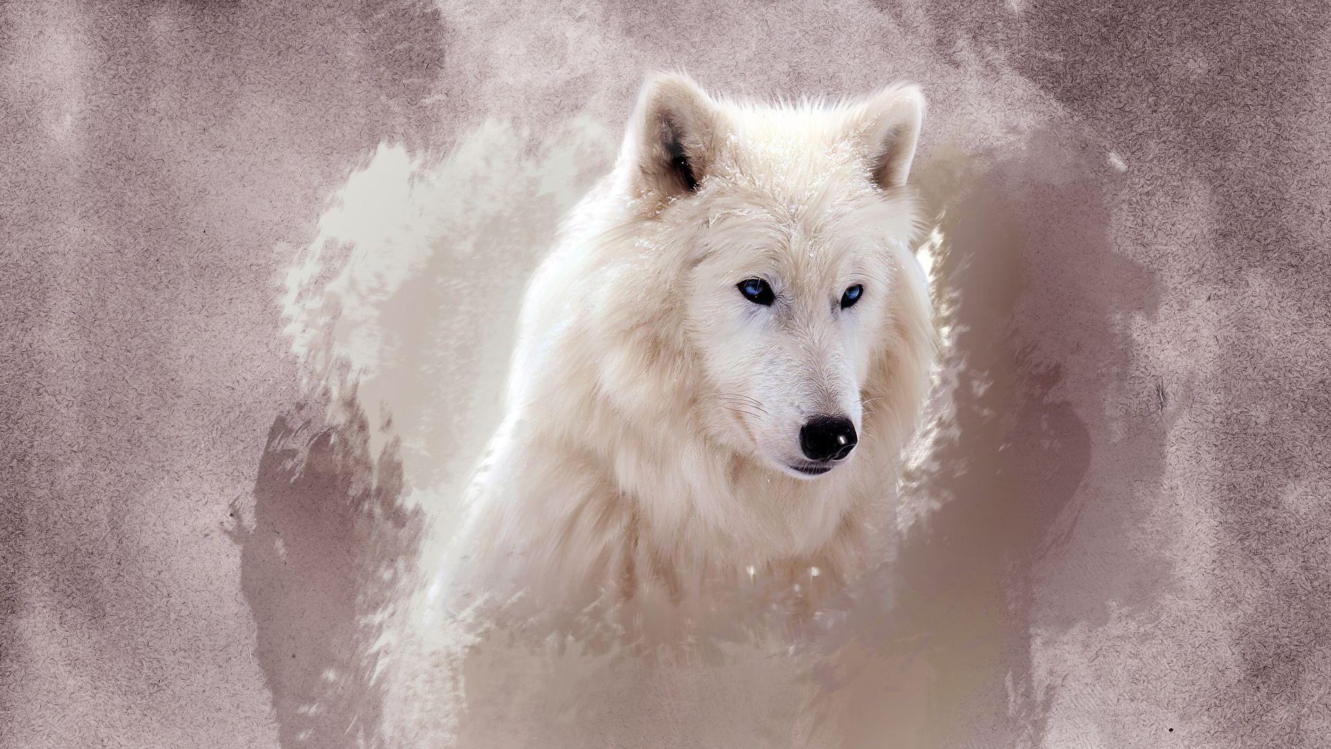 1920x1080 The Wolf hình nền