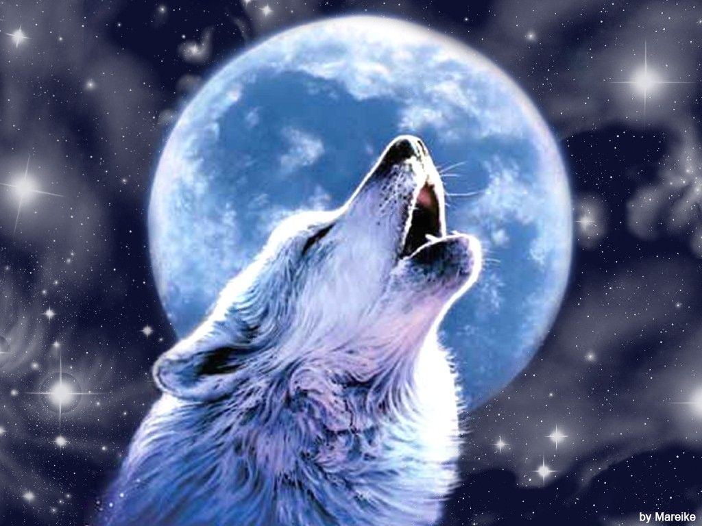Beautiful Wolves Wallpapers Top Free Beautiful Wolves