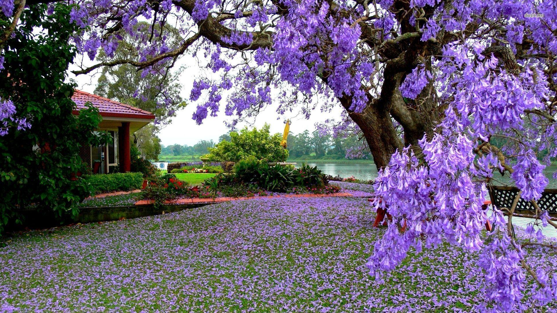 Flower Garden Wallpapers Top Free Flower Garden Backgrounds Wallpaperaccess