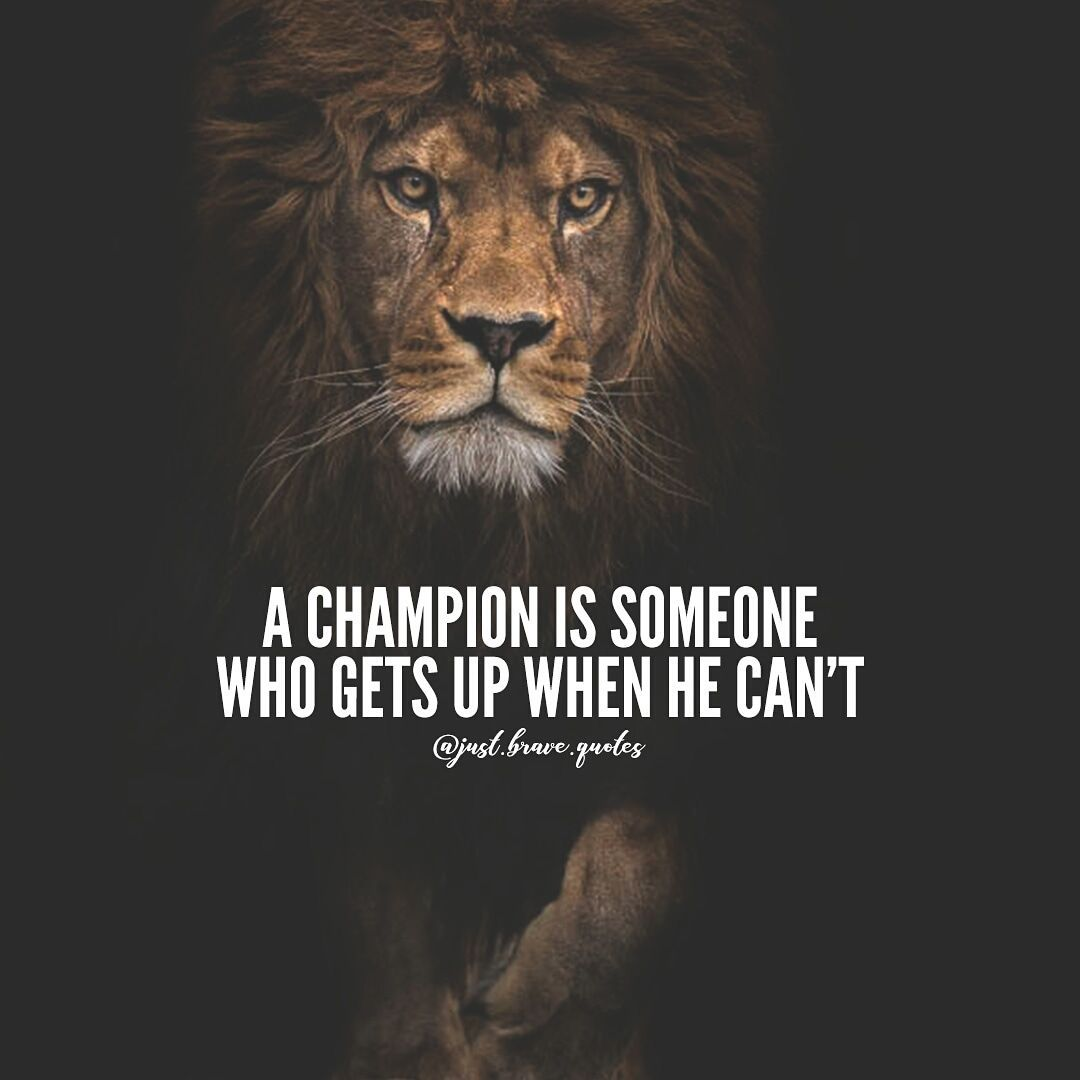 Lion Quotes HD Wallpapers - Top Free Lion Quotes HD Backgrounds