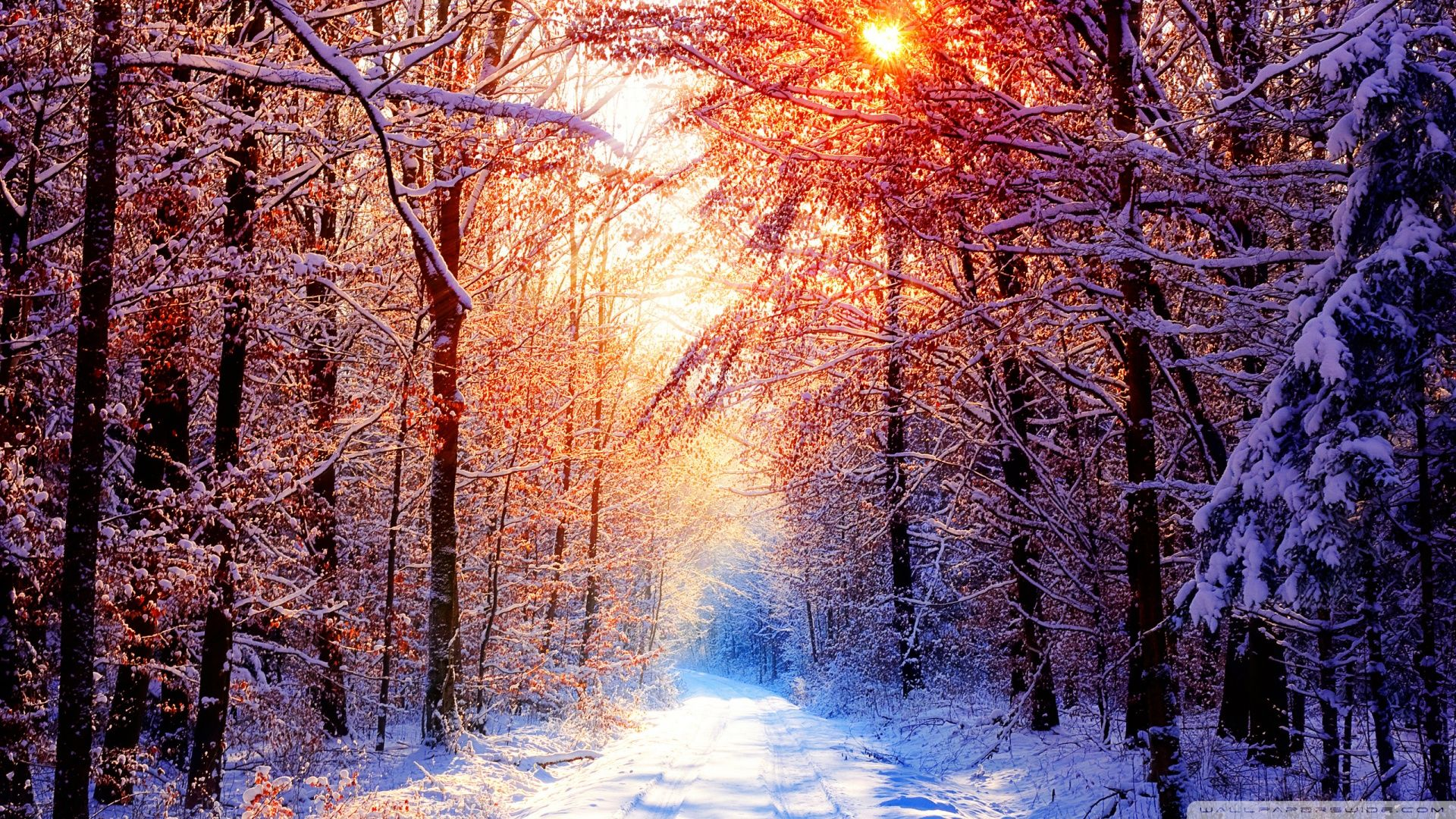 Winter Scenery Wallpapers Top Free Winter Scenery Backgrounds Wallpaperaccess