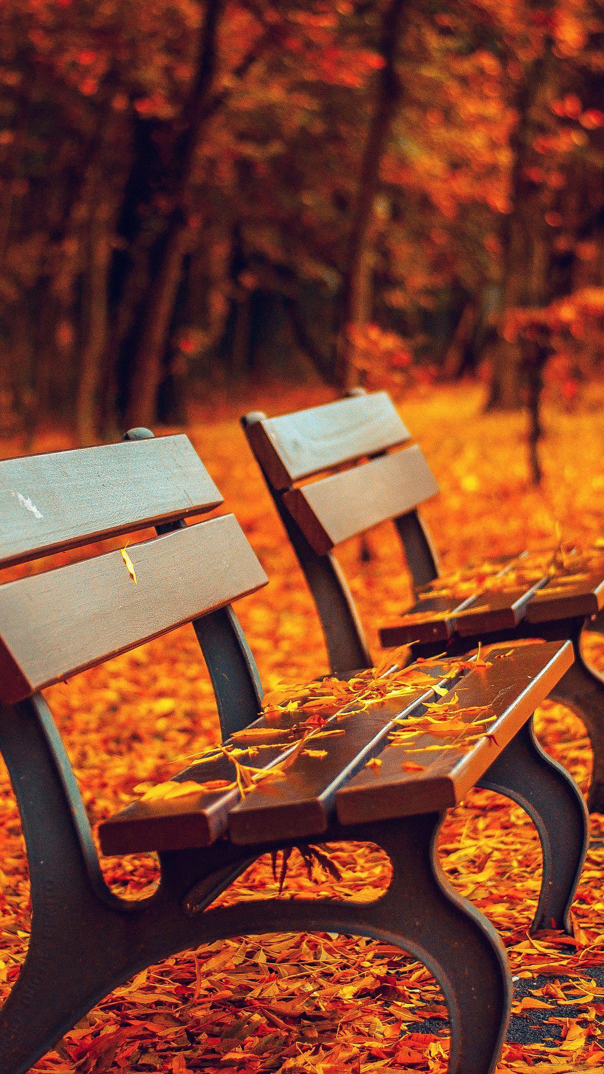 1242x2208 Hình nền mùa thu đẹp nhất dành cho iPhone của bạn.  Chia sẻ tin tức