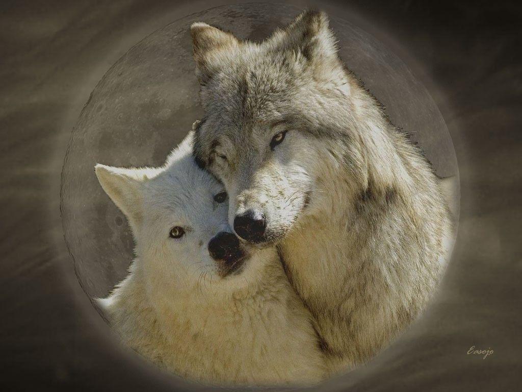 целующиеся волки признания в любви картинки белгороде