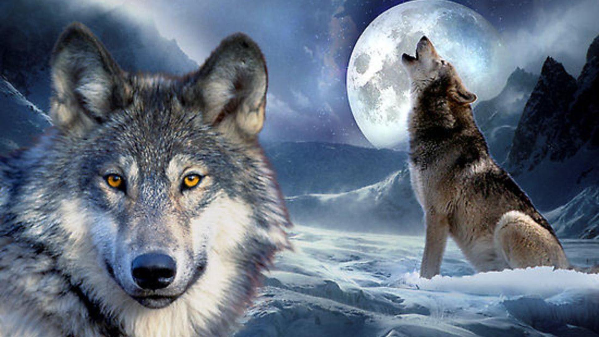 1920x1080 Wolves in Love hình nền