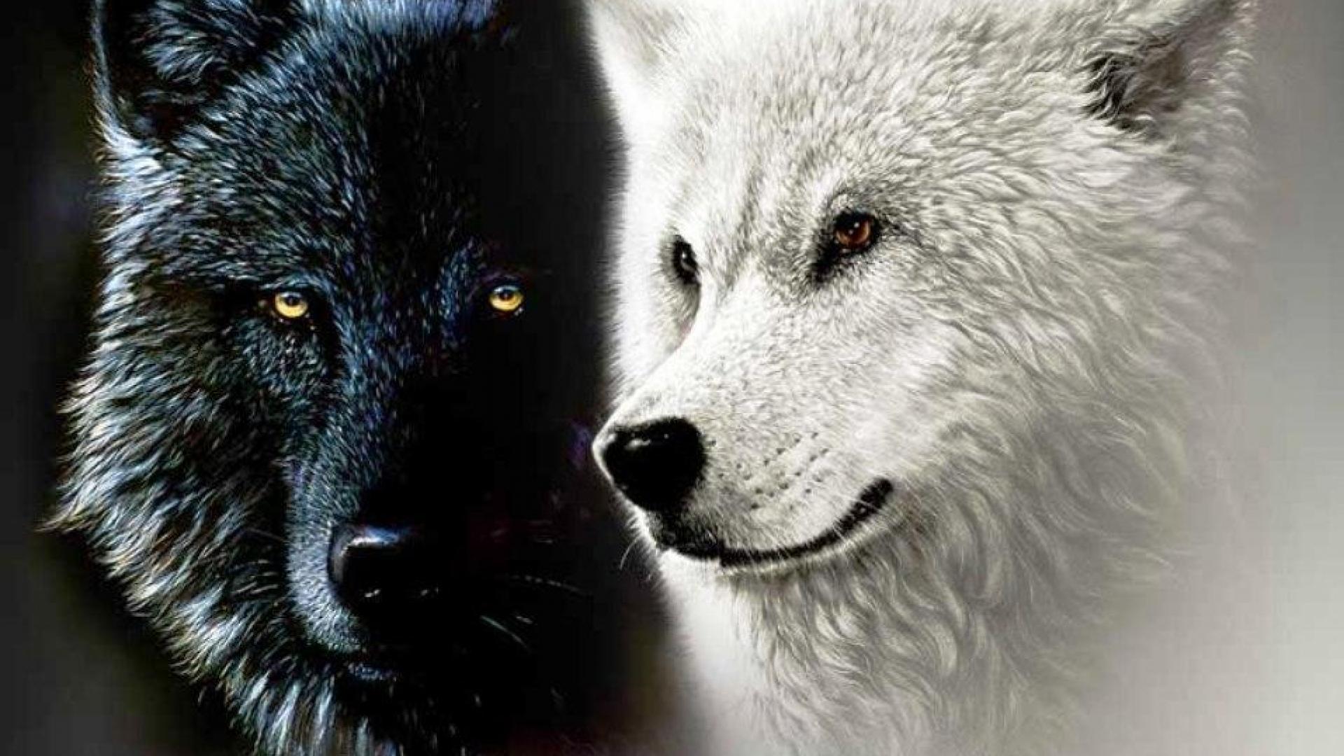 1920x1080 White Wolves hình nền