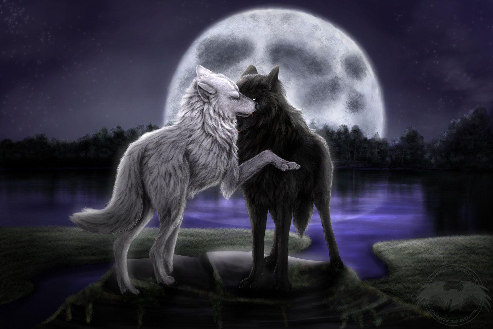 1600x1067 Moon Wolf 3 Hình nền HD