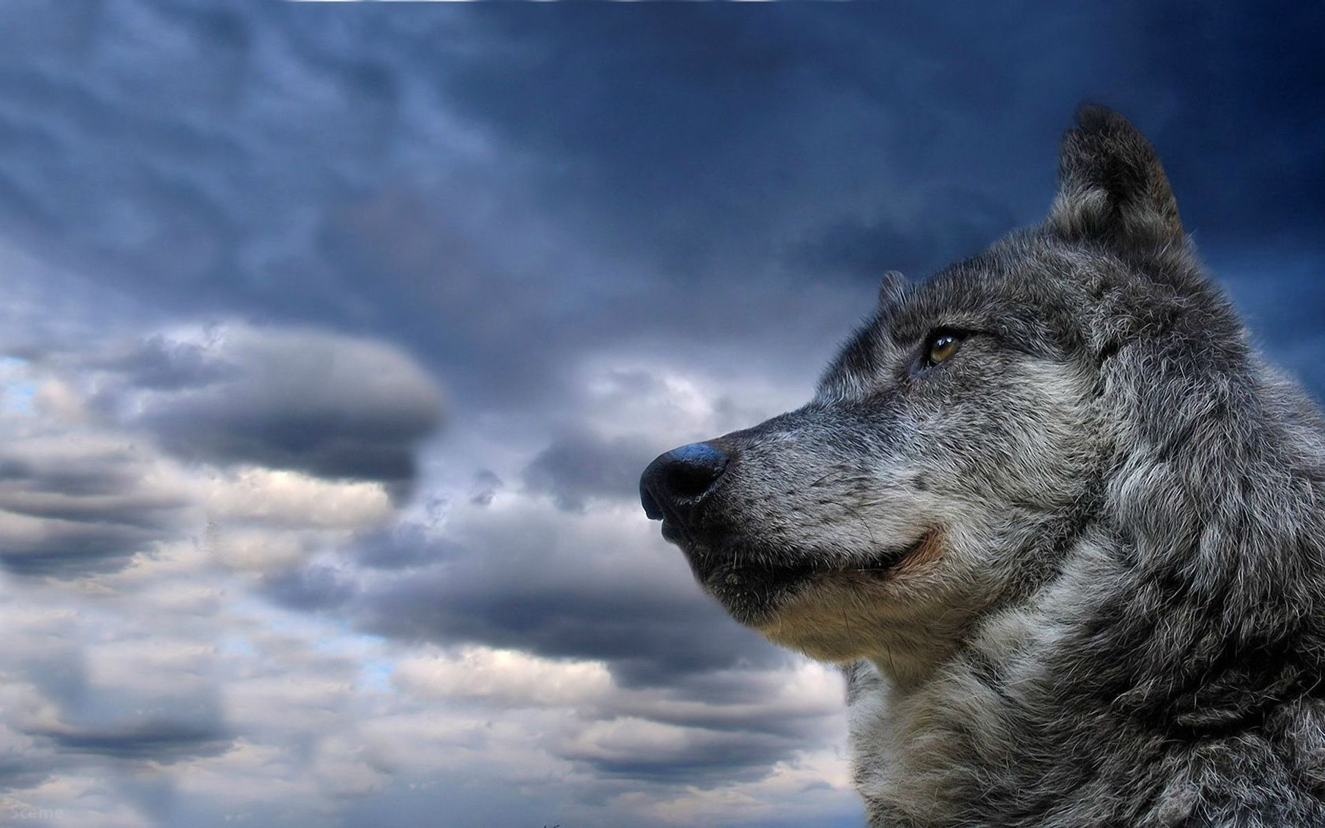 1920x1200 HD Walls of Wolves Hình nền HD Wolves HD đẹp nhất.  hình nền