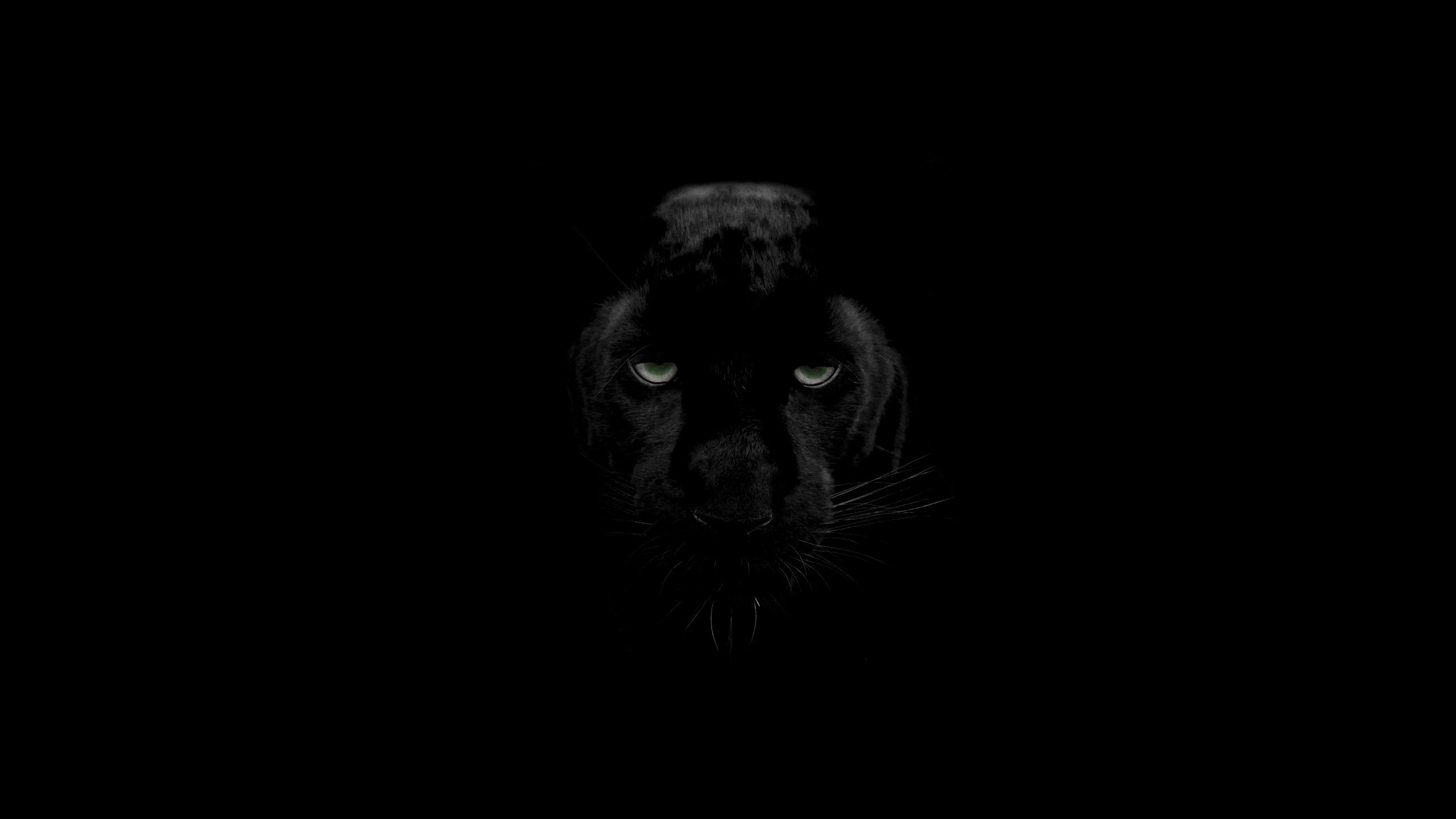 Black Panther Eyes Wallpapers Top Free Black Panther Eyes Backgrounds Wallpaperaccess