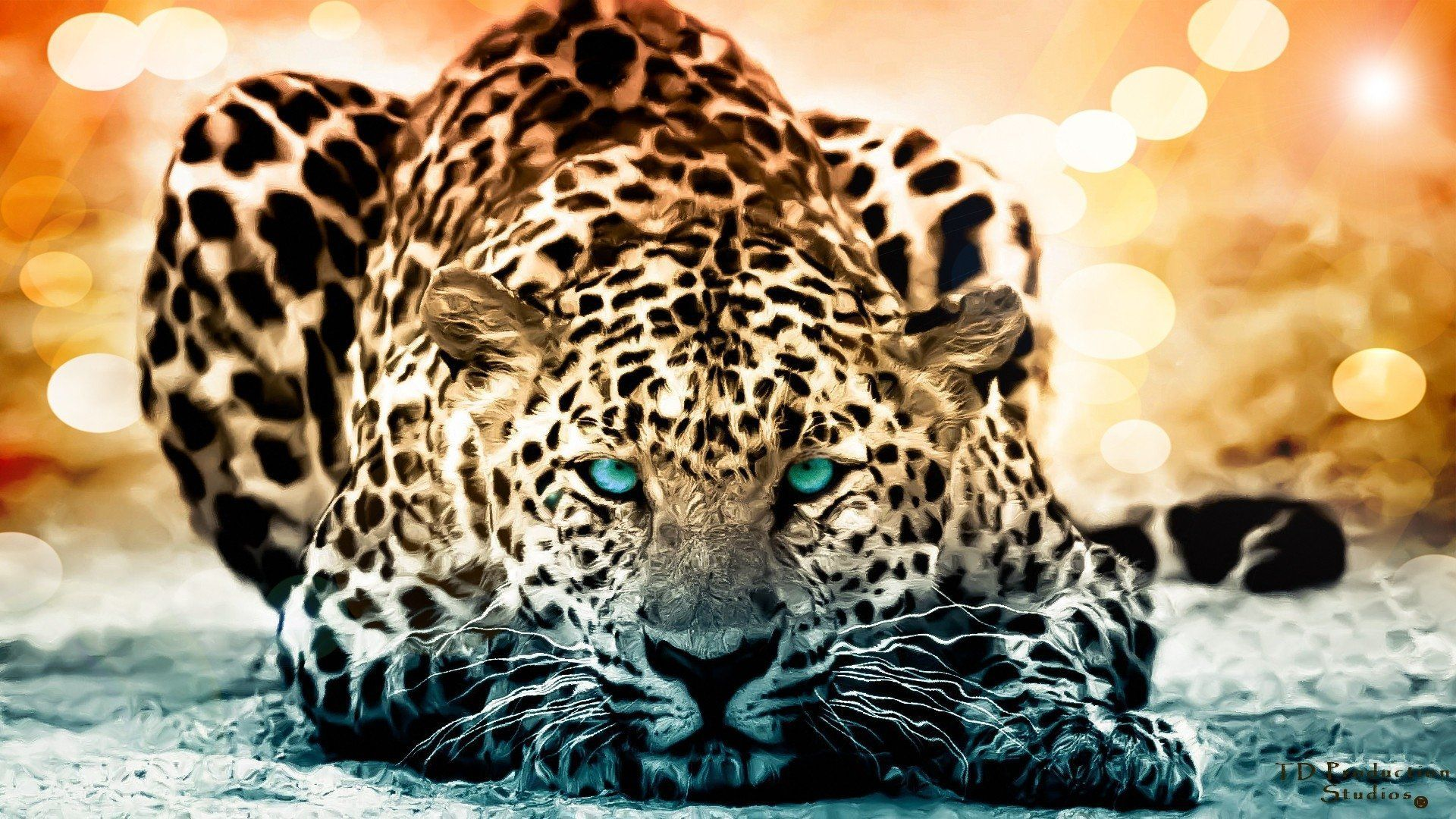 Exotic Animal Wallpapers - Top Free Exotic Animal Backgrounds ...