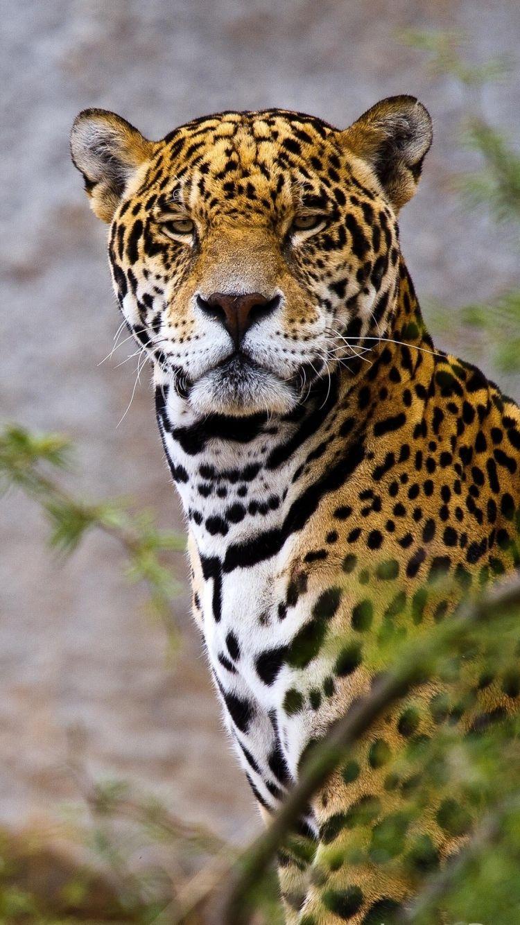 """1920x1080 Jaguar Wallpaper HD 01754 - Baltana"""">"""