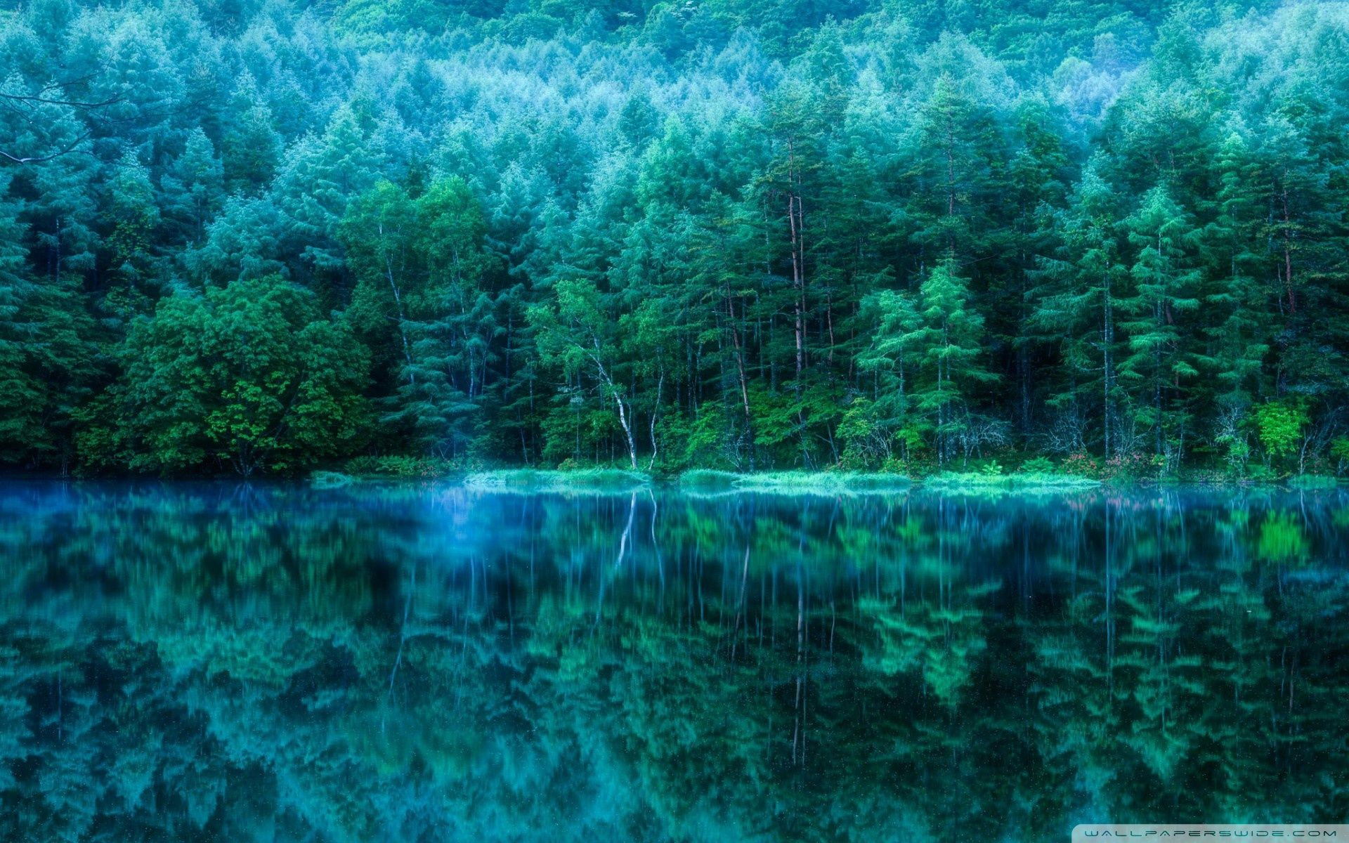 Japanese Forest Wallpapers - Top Free Japanese Forest ...