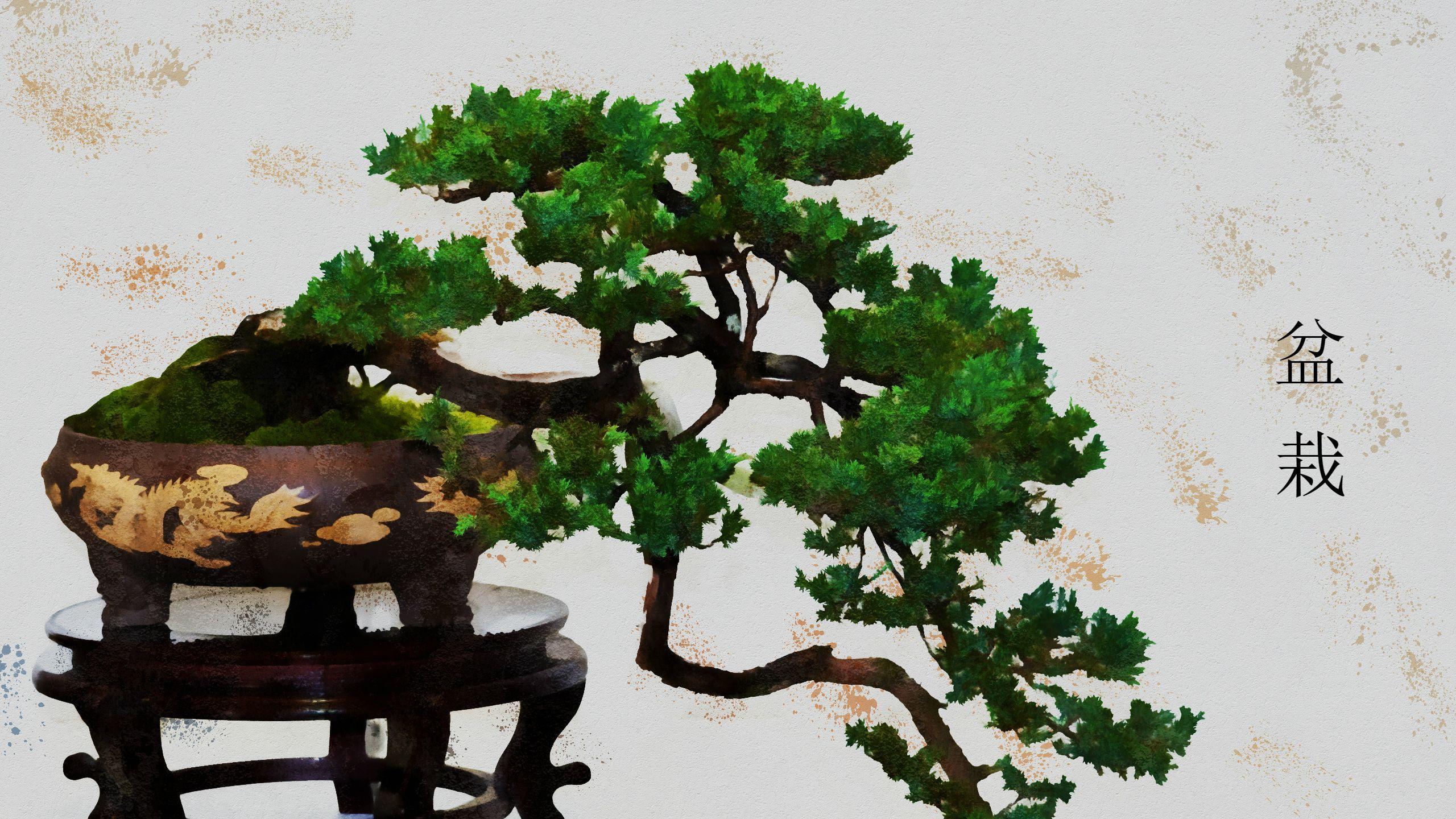 картинки бонсай на рабочий стол сорта песчаника используются