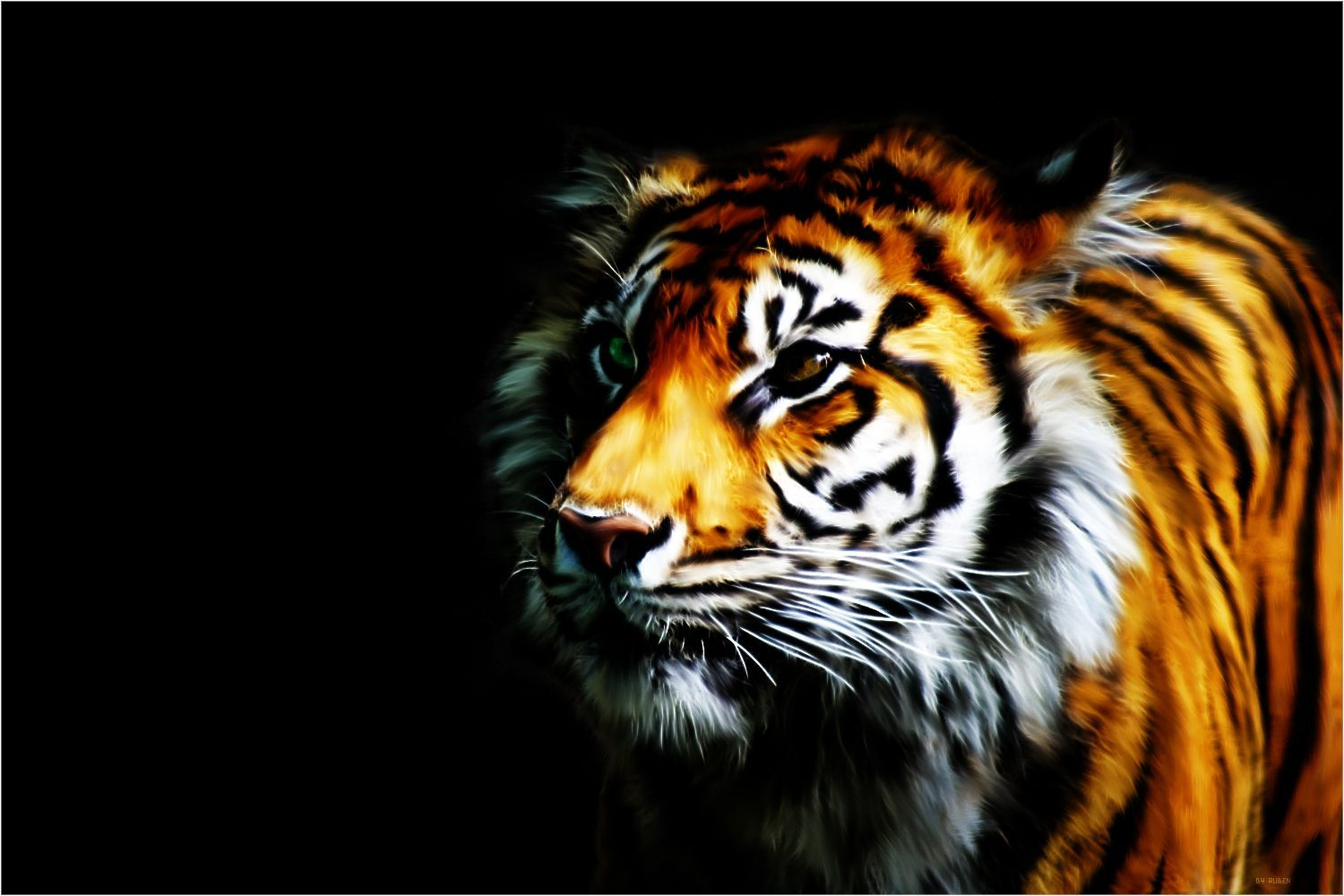 Hipster Tiger Galaxy Wallpapers Top Free Hipster Tiger Galaxy Backgrounds Wallpaperaccess