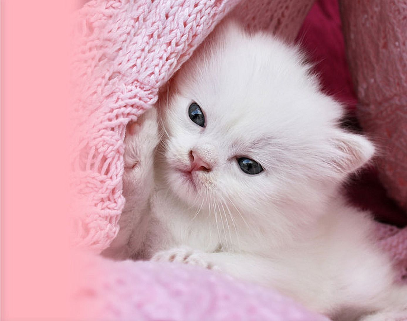 Pink Cat Wallpapers Top Free Pink Cat Backgrounds