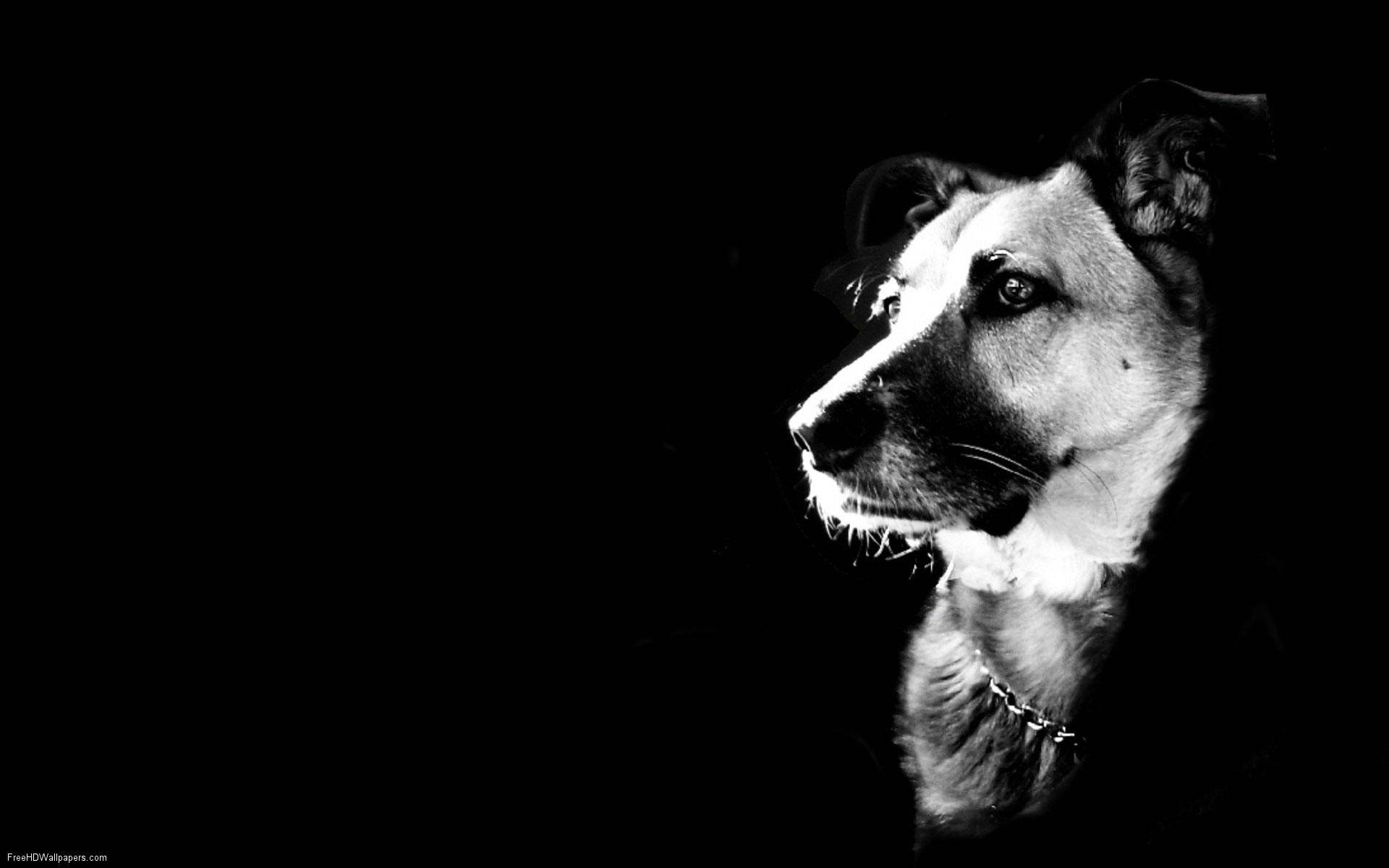 Cool Dog Wallpapers Top Free Cool Dog Backgrounds Wallpaperaccess