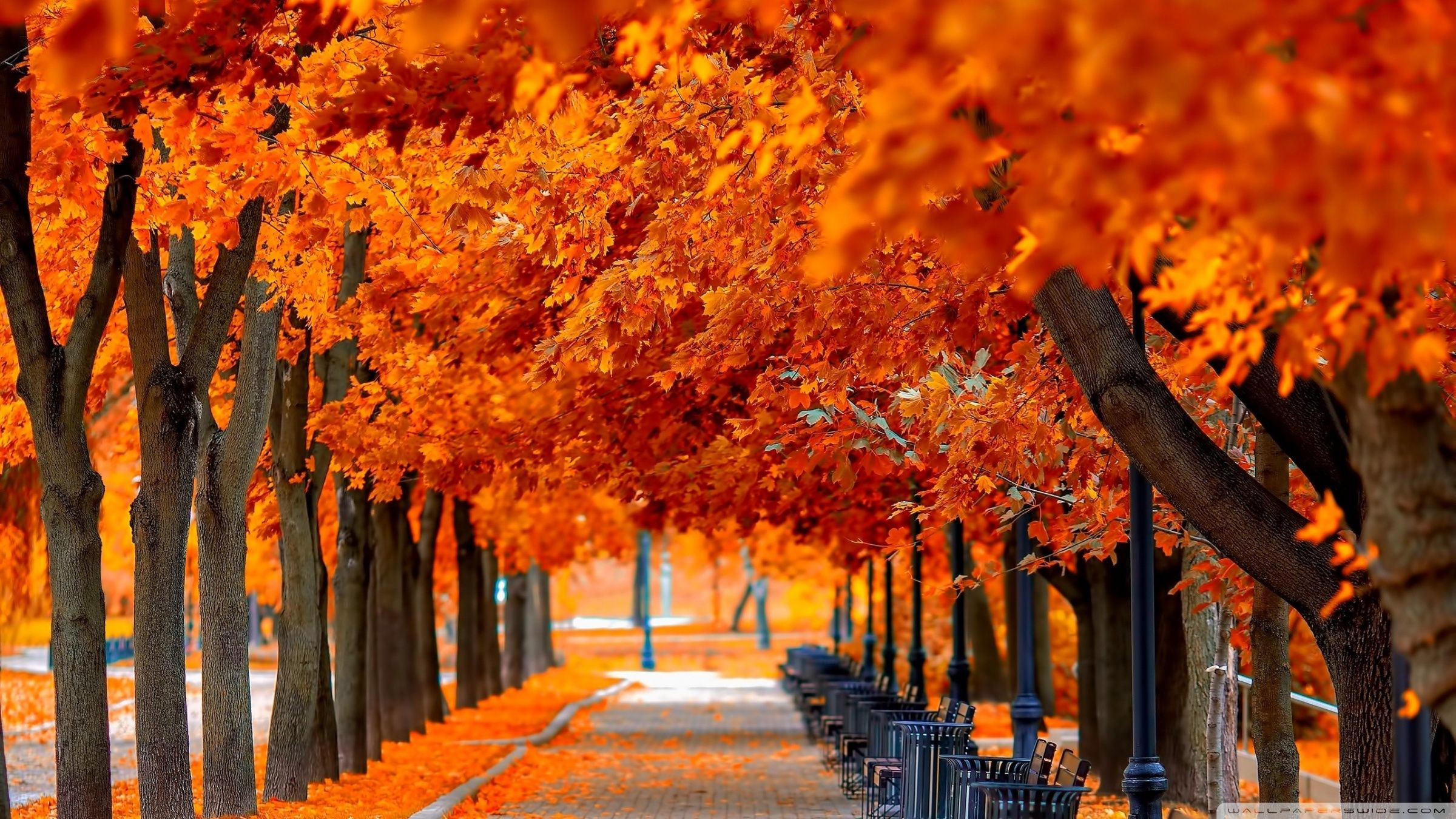 Fall Wallpapers Top Free Fall Backgrounds Wallpaperaccess