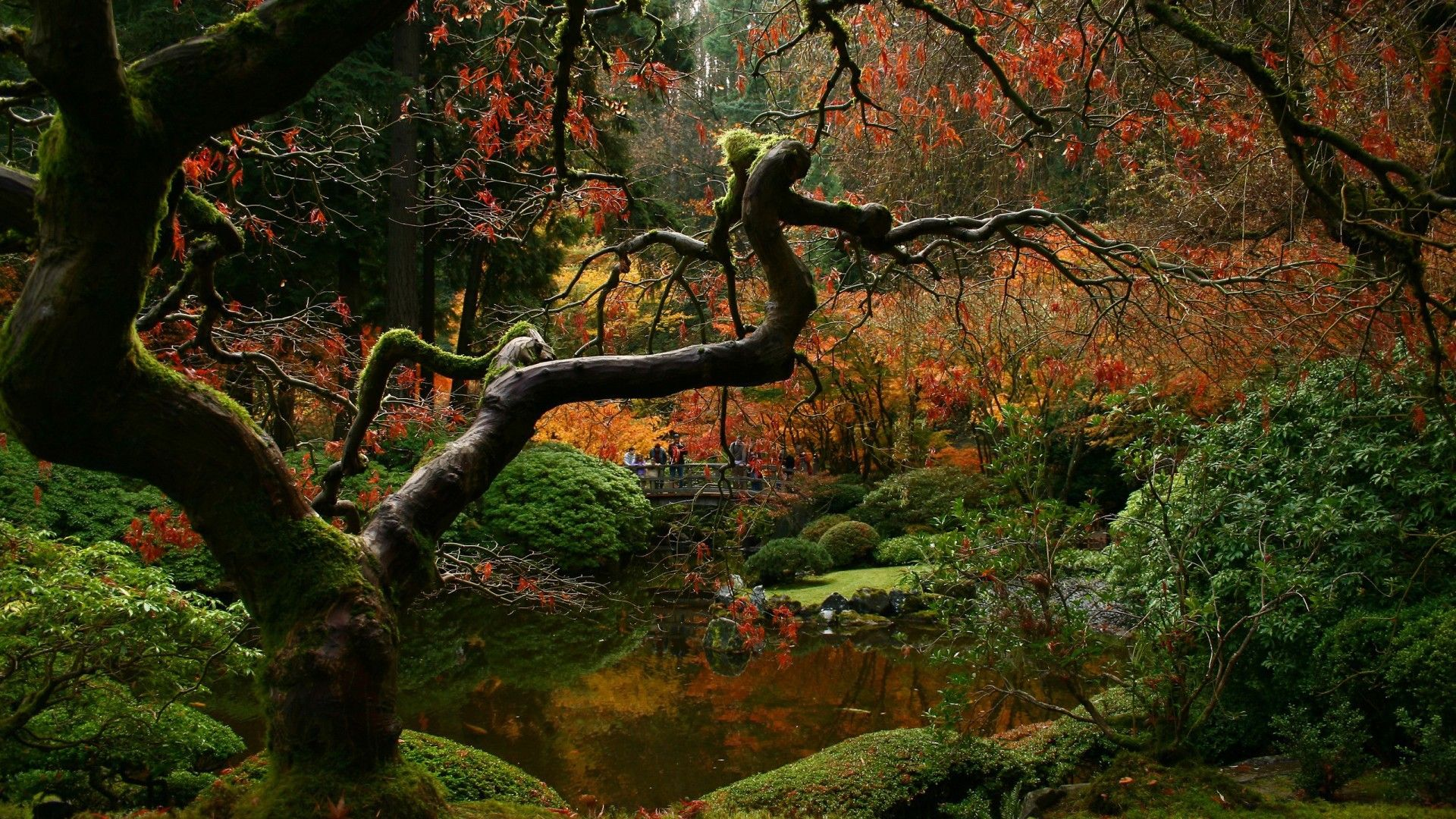 Japanese Forest Wallpapers Top Free Japanese Forest