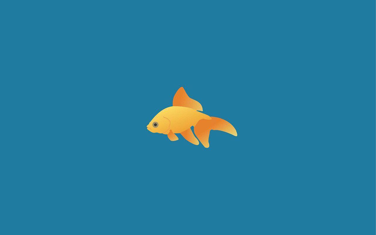 Minimalist Fish Wallpapers Top Free Minimalist Fish Backgrounds Wallpaperaccess