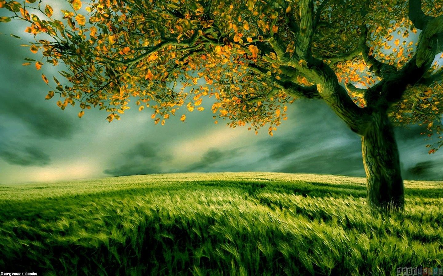 Tree Wallpapers Top Free Tree Backgrounds Wallpaperaccess