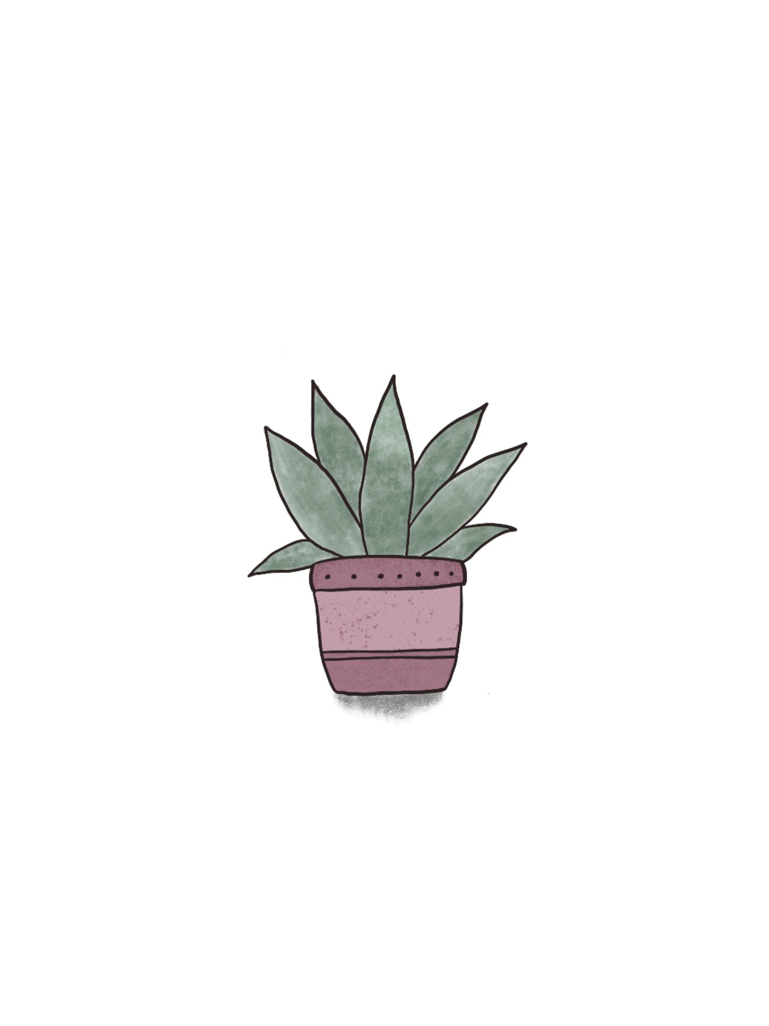 Minimalist Cactus Wallpapers Top Free Minimalist Cactus Backgrounds Wallpaperaccess