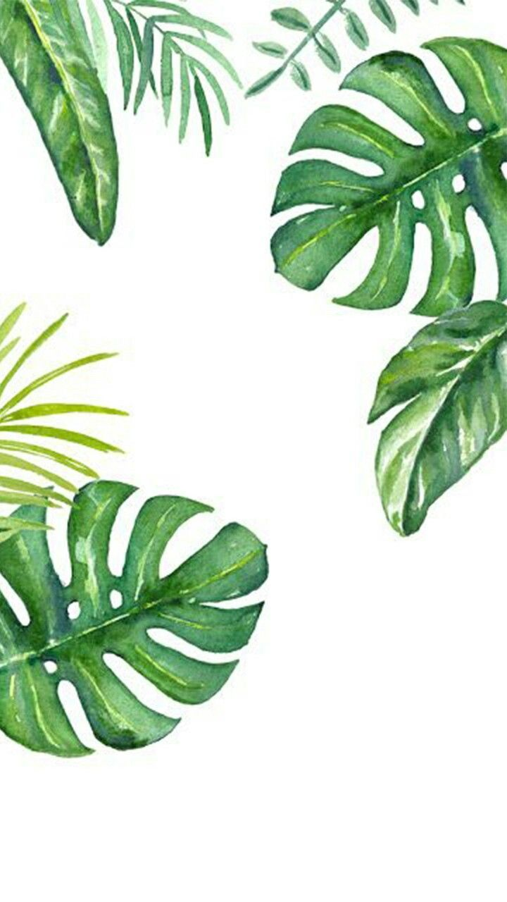 Tropical Plants Drawing Wallpapers Top Free Tropical Plants Drawing Backgrounds Wallpaperaccess We have collected 38+ original and carefully picked tropical leaves drawing in one place. tropical plants drawing wallpapers