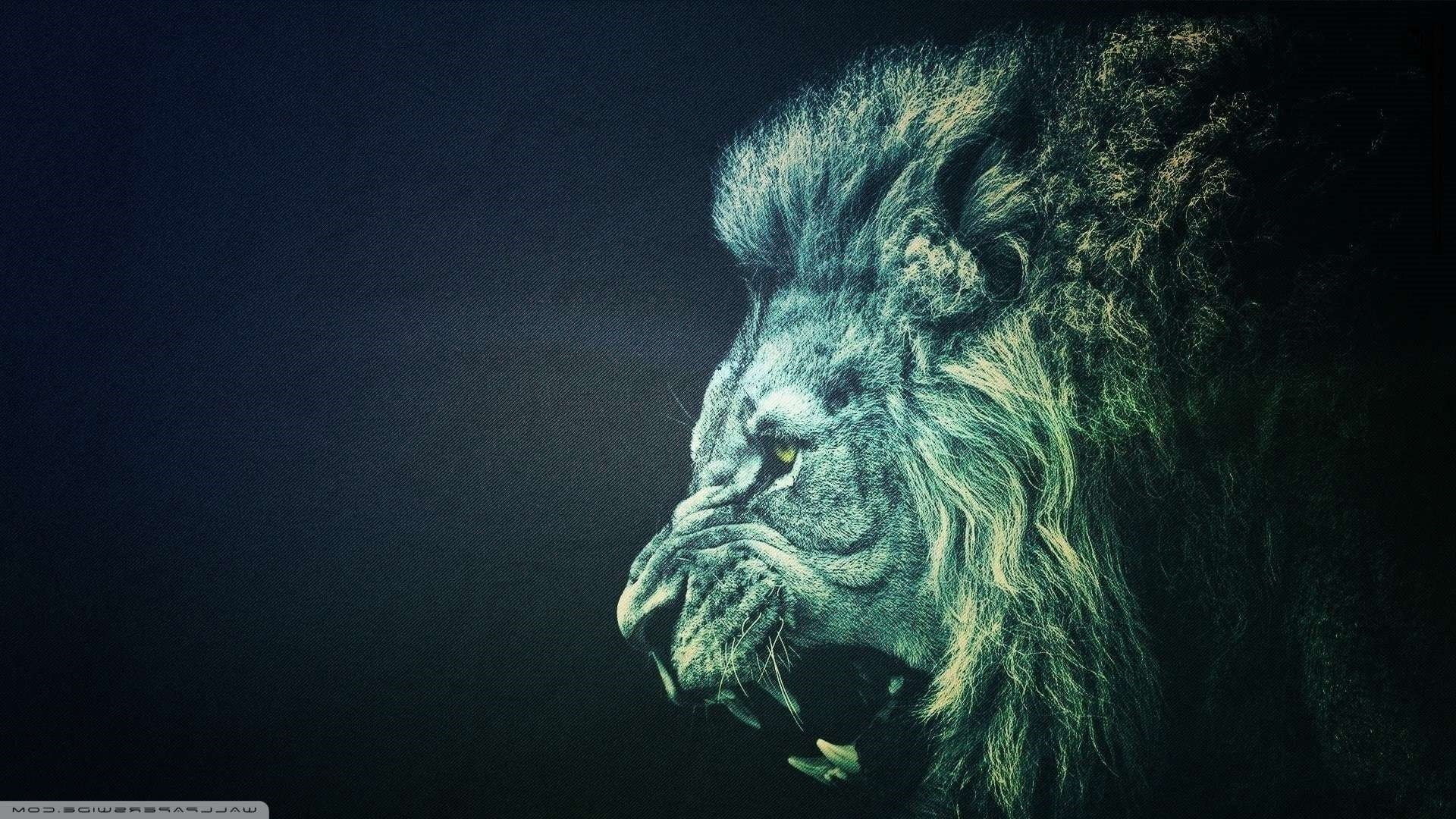 Trippy Lion Wallpapers Top Free Trippy Lion Backgrounds