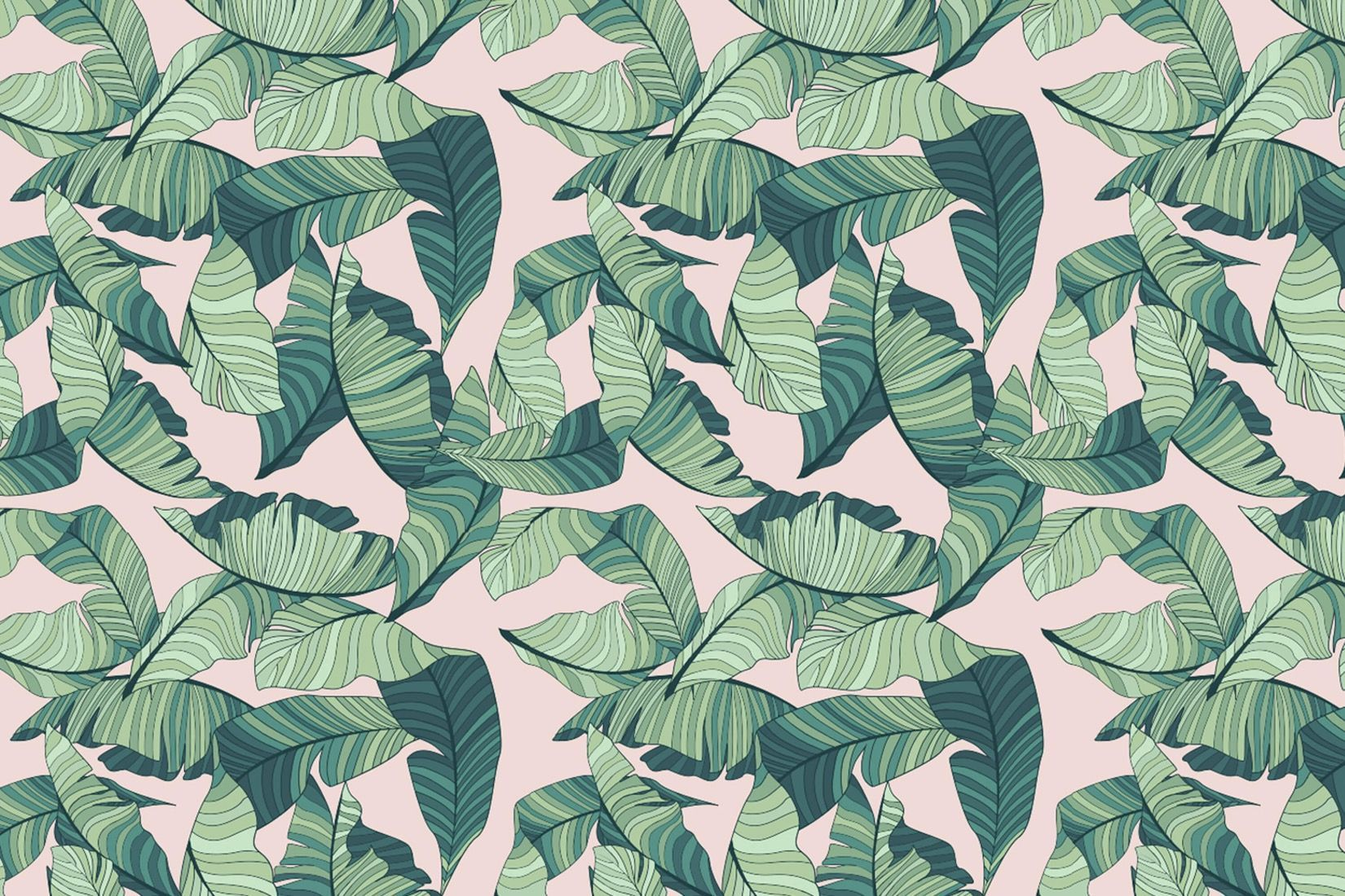 Pink Tropical Leaves Wallpapers Top Free Pink Tropical Leaves Backgrounds Wallpaperaccess Variegated houseplants are cute and all, but sometimes it's not easy being green. pink tropical leaves wallpapers top