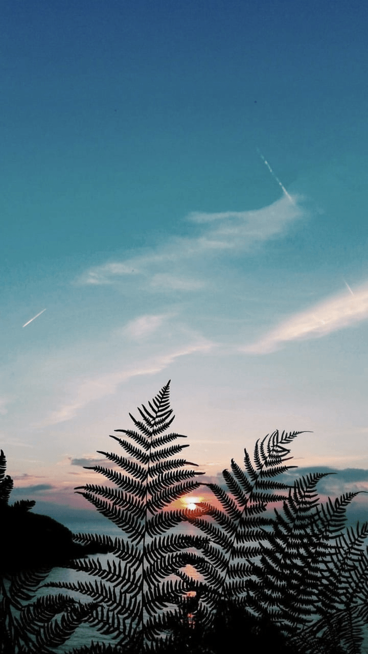 Aesthetic Nature Tumblr Wallpapers   Top Free Aesthetic Nature ...