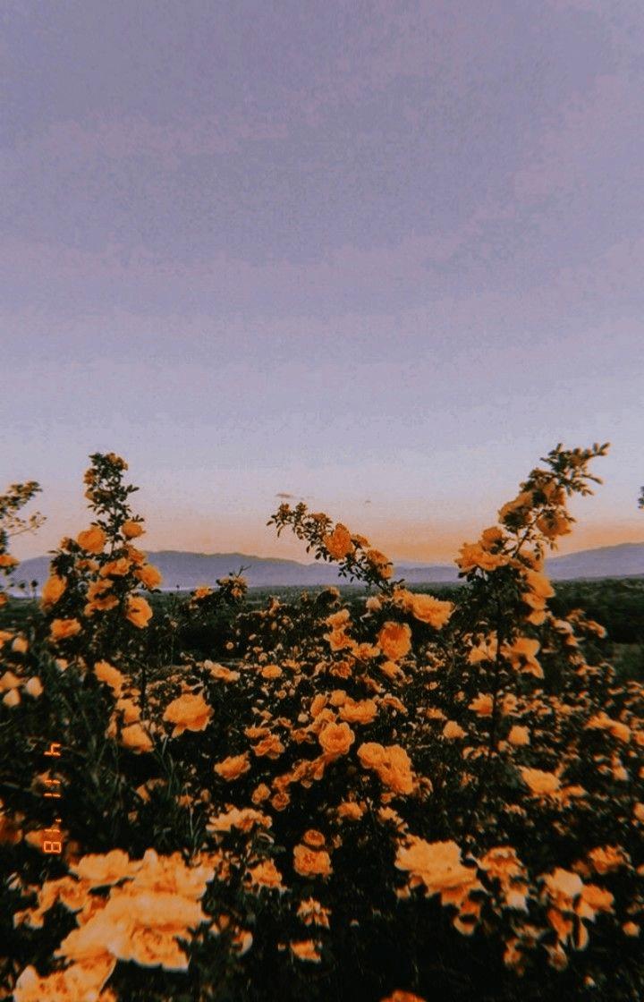 Tumblr Pics