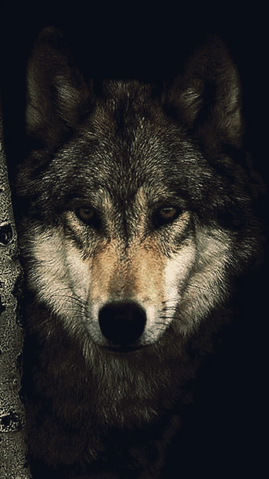 Wolf Phone Wallpapers Top Free Wolf Phone Backgrounds