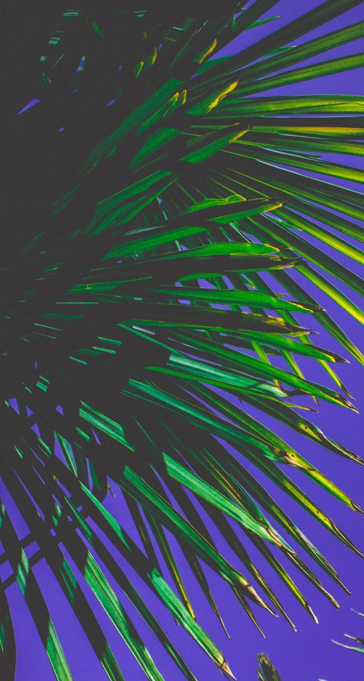 744x1392 Hình Nền iPhone.  Màu xanh lá cây, Dòng, Mẫu, Đồ họa