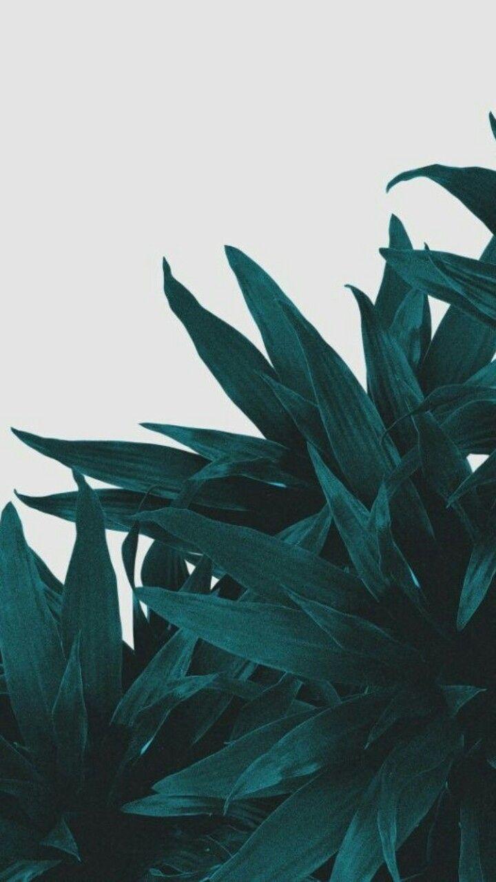 720x1280 Aesthetic iPhone Mint Green Wallpaper HD
