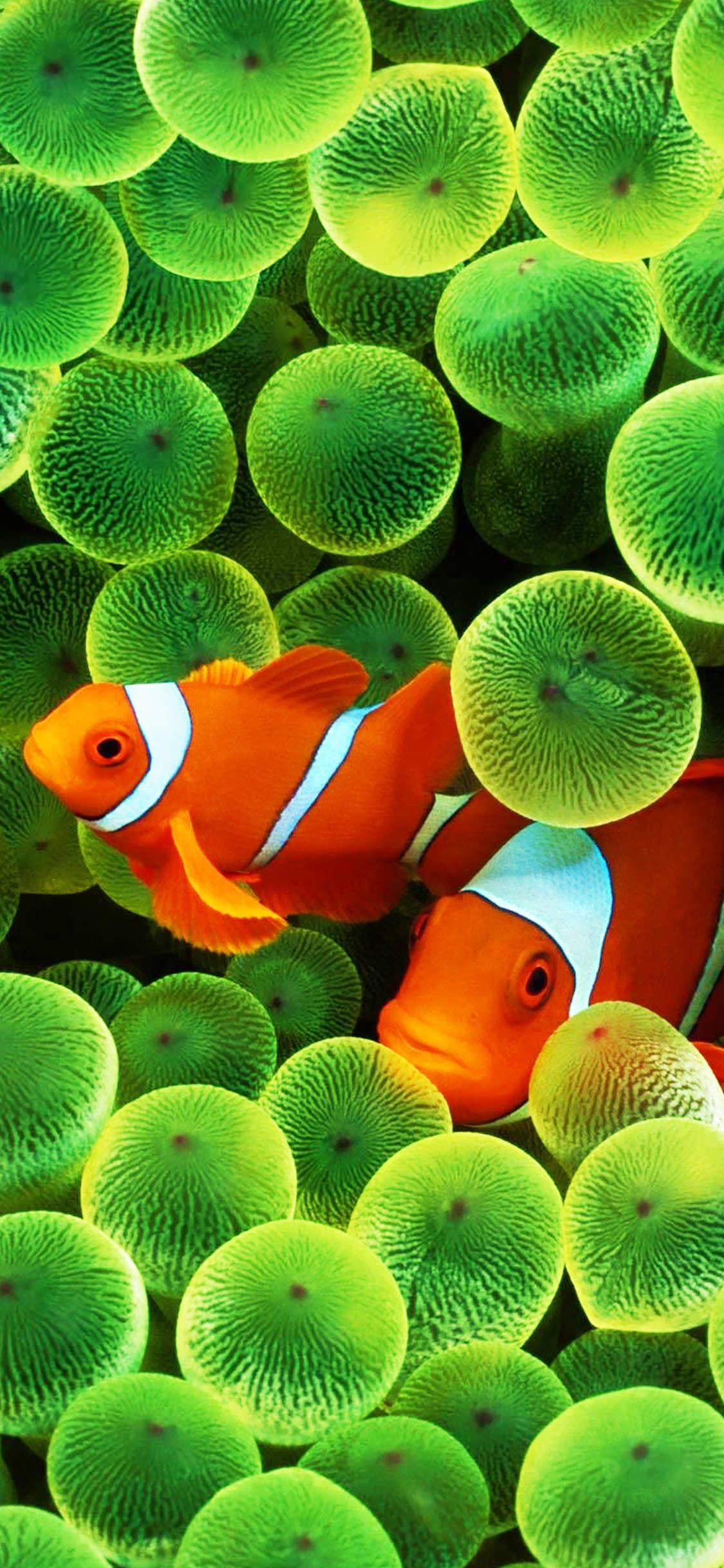 Fish iPhone Wallpapers   Top Free Fish iPhone Backgrounds ...