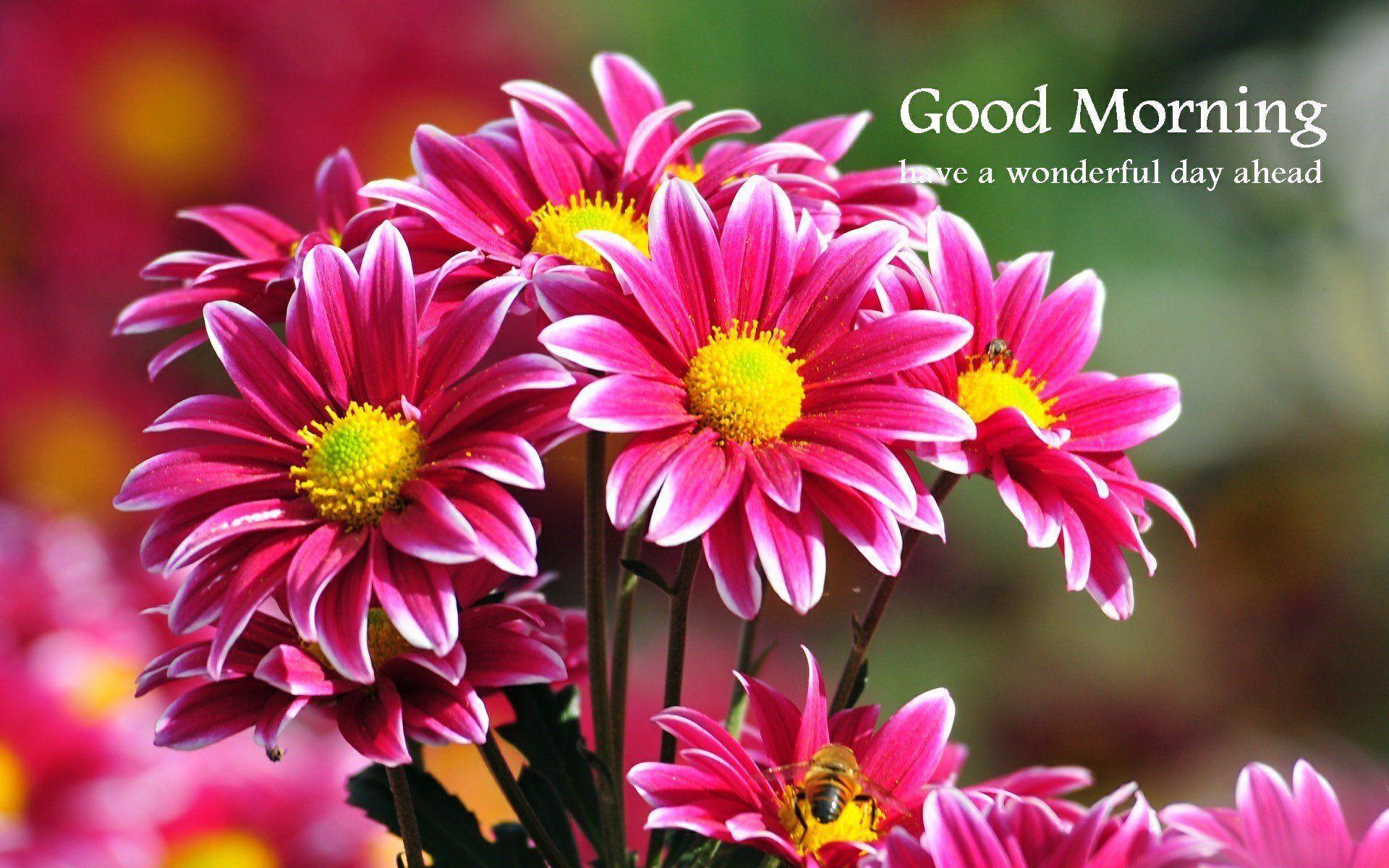 1920x1200 Hình nền hoa Thiên nhiên Buổi sáng sớm Chào buổi sáng