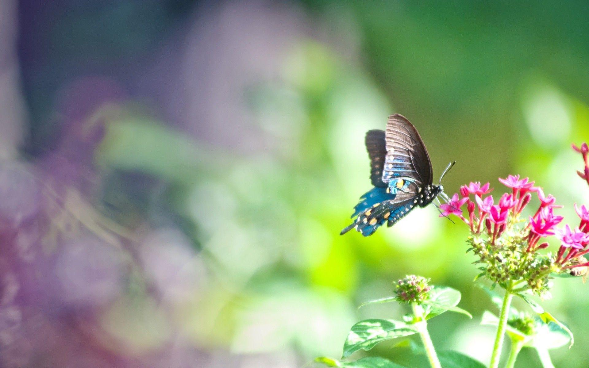 Butterfly Emoji Wallpapers - Top Free Butterfly Emoji ...