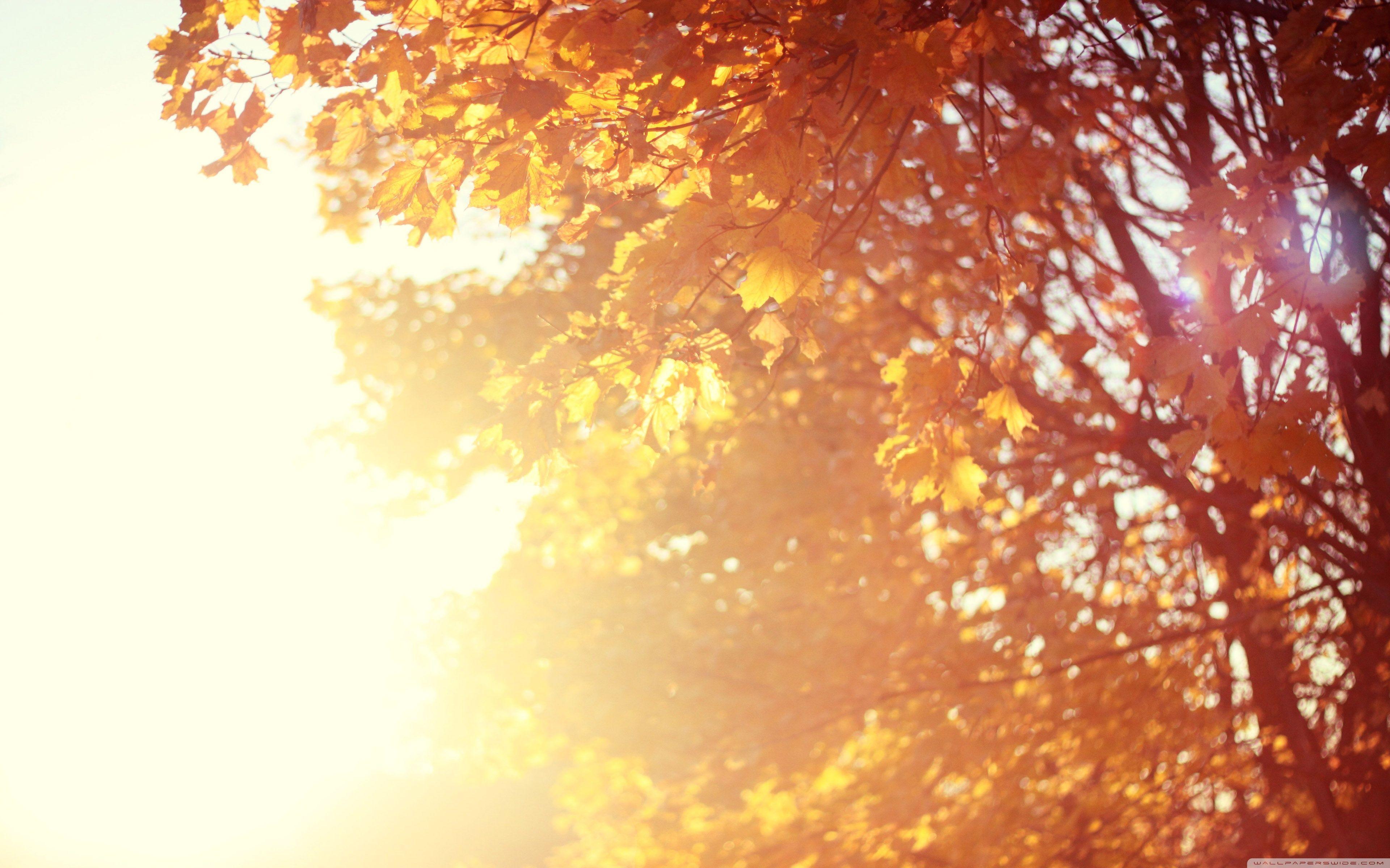 November Wallpapers Top Free November Backgrounds Wallpaperaccess
