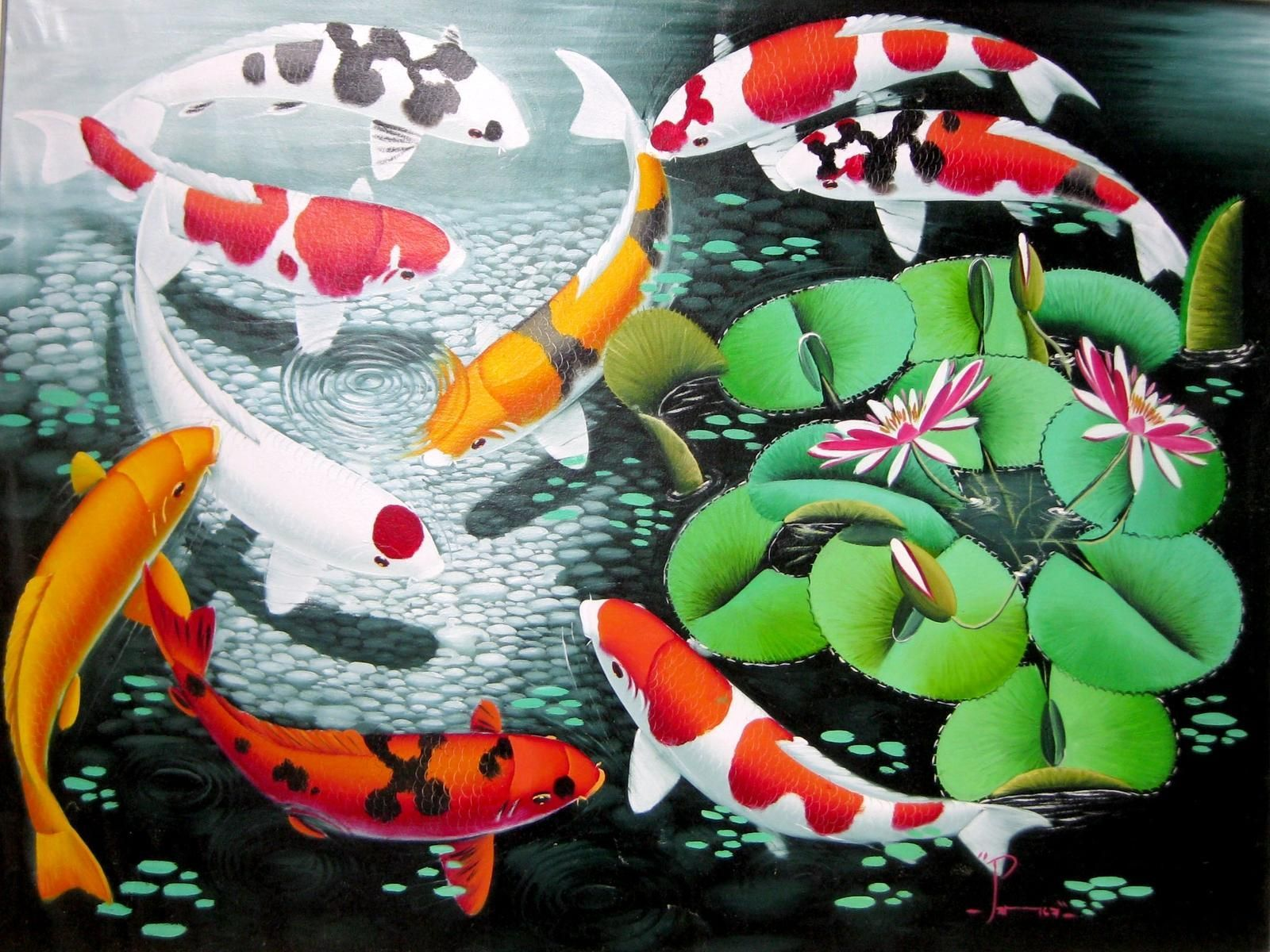 Japanese Koi Fish Wallpapers Top Free Japanese Koi Fish Backgrounds Wallpaperaccess
