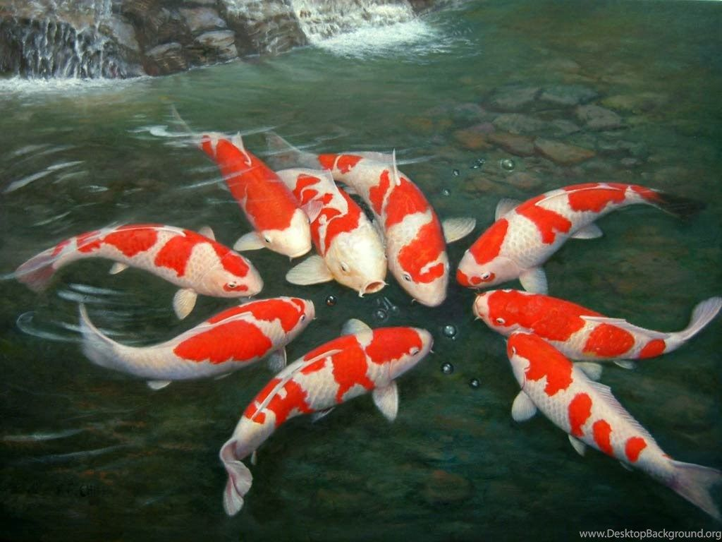 "1024x768 Japanese Koi Fish Pond Wallpapers Desktop Background""> · Download · 1024x768 ..."