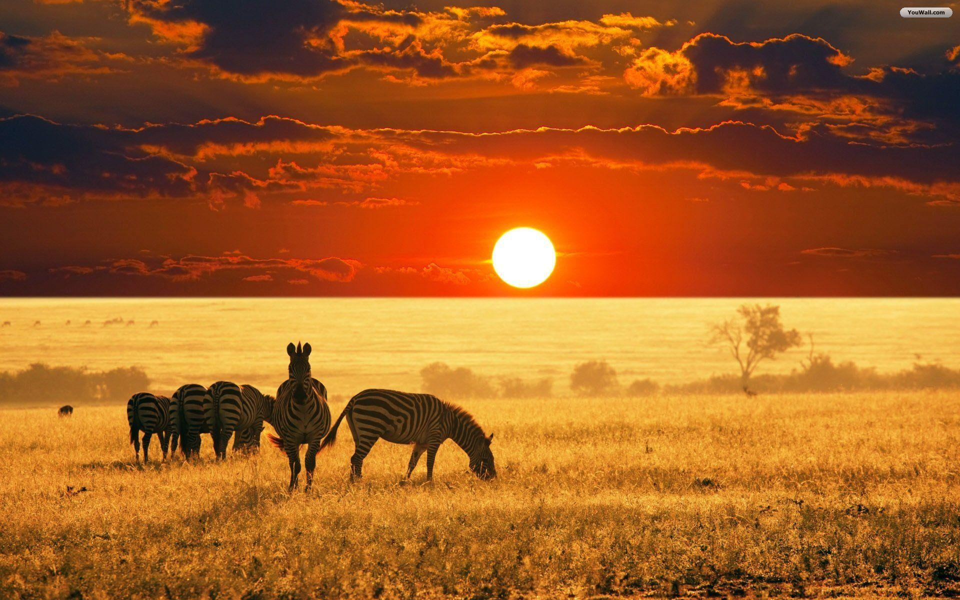Africa Wallpapers Top Free Africa Backgrounds Wallpaperaccess