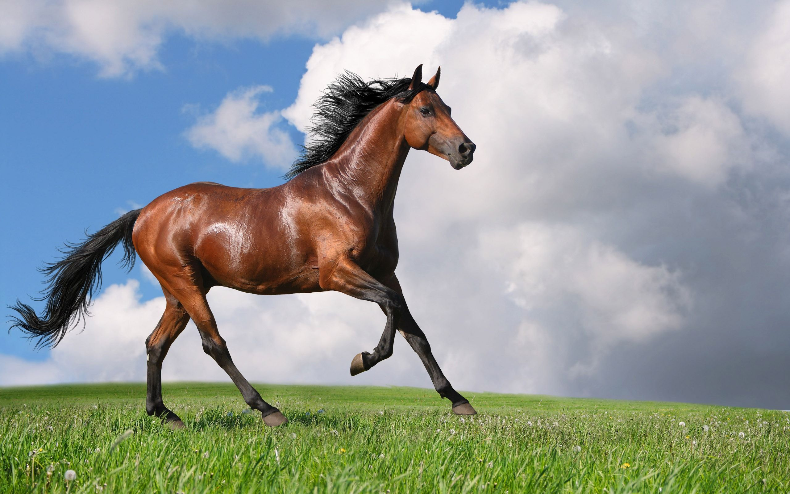 Brown Horse Wallpapers Top Free Brown Horse Backgrounds Wallpaperaccess