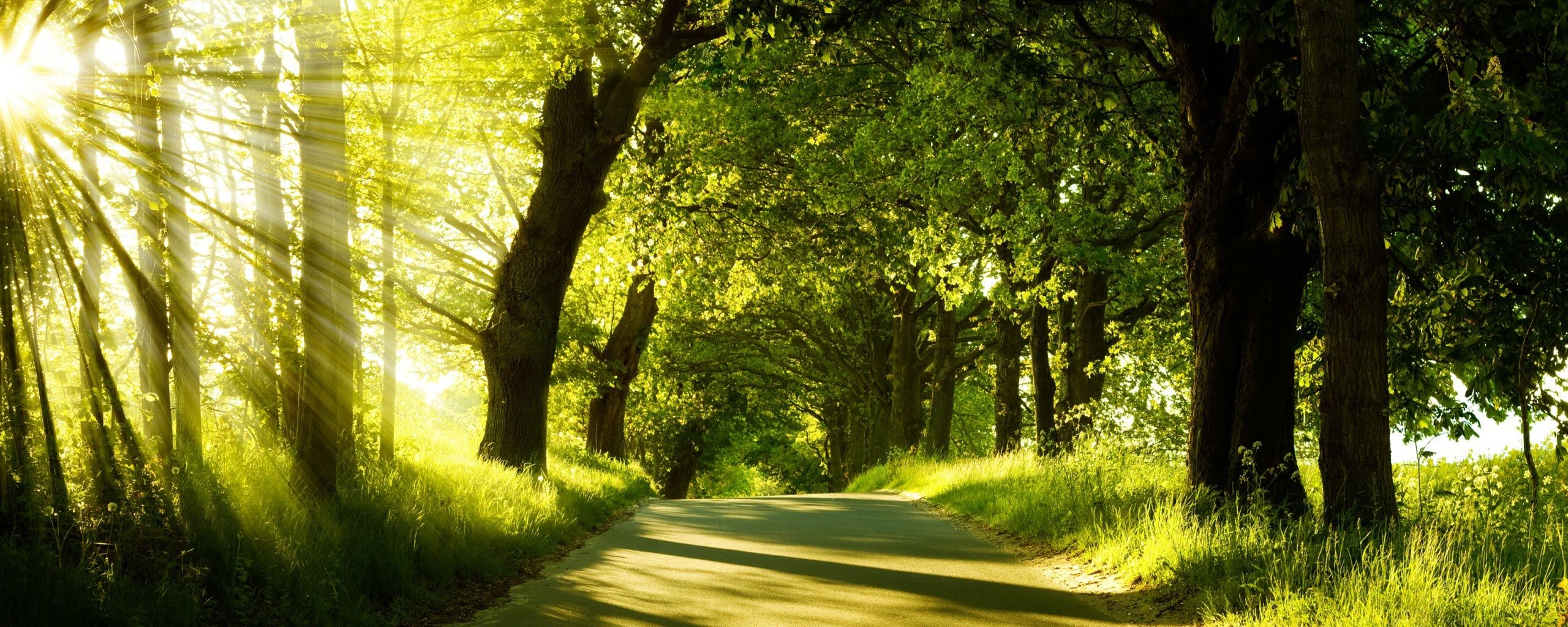 Nature Wallpapers - Top Free Nature Backgrounds - WallpaperAccess