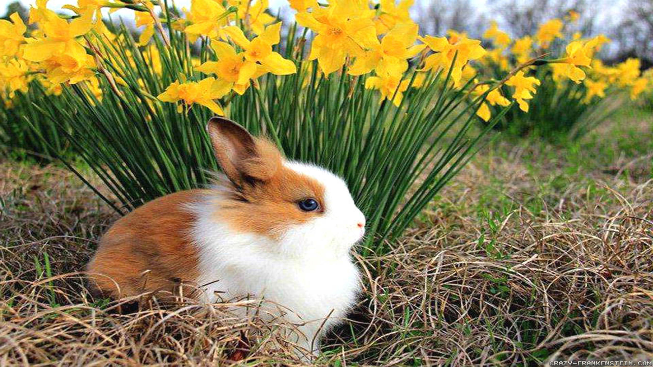 Cool Animal Wallpapers the best images in