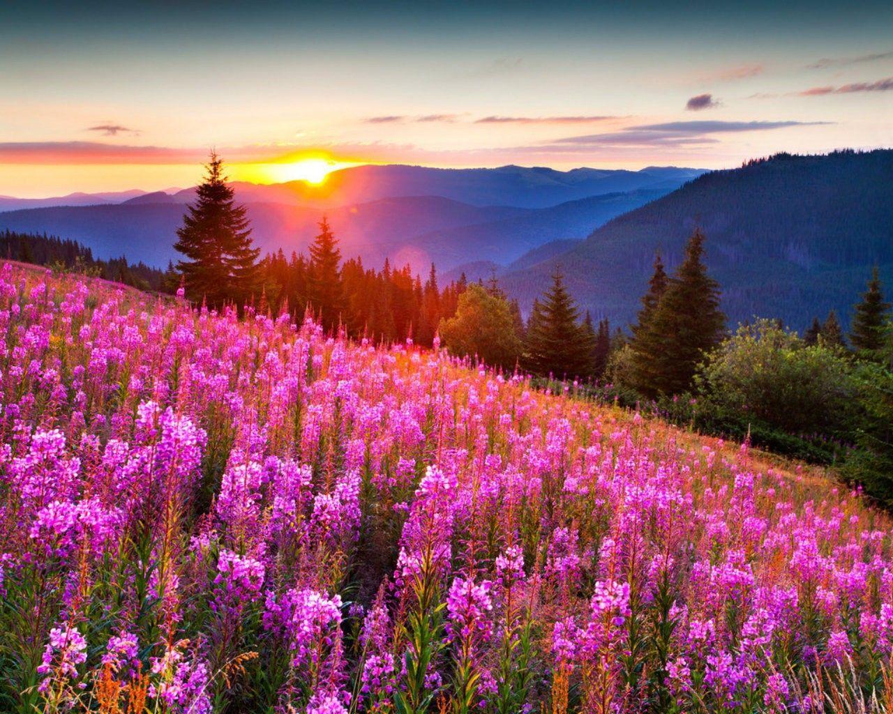 58 best free beautiful scenery desktop wallpapers wallpaperaccess 1920x1080 scenery desktop clipart izmirmasajfo