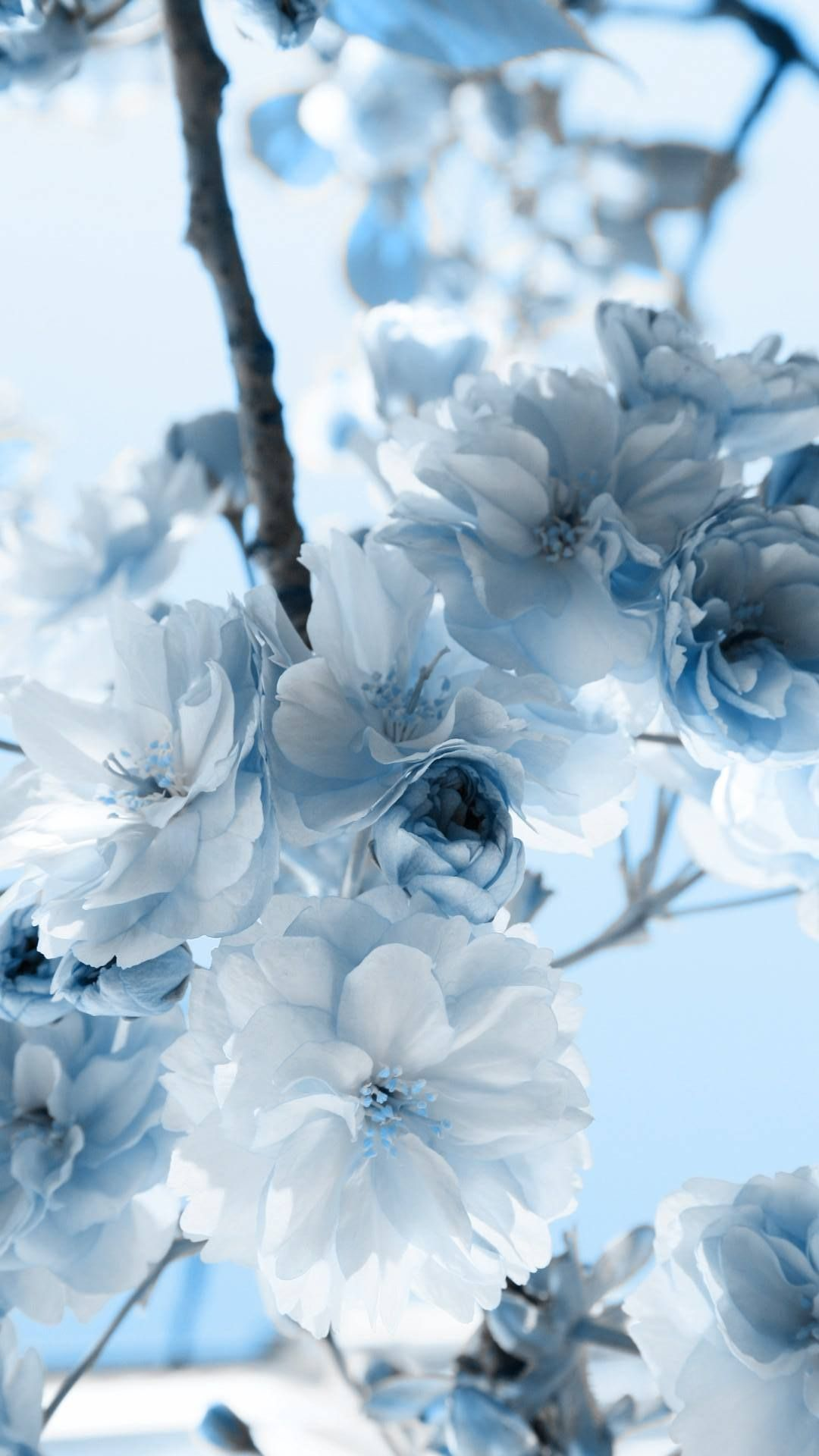 Pastel Blue Flower Wallpapers Top Free Pastel Blue Flower Backgrounds Wallpaperaccess