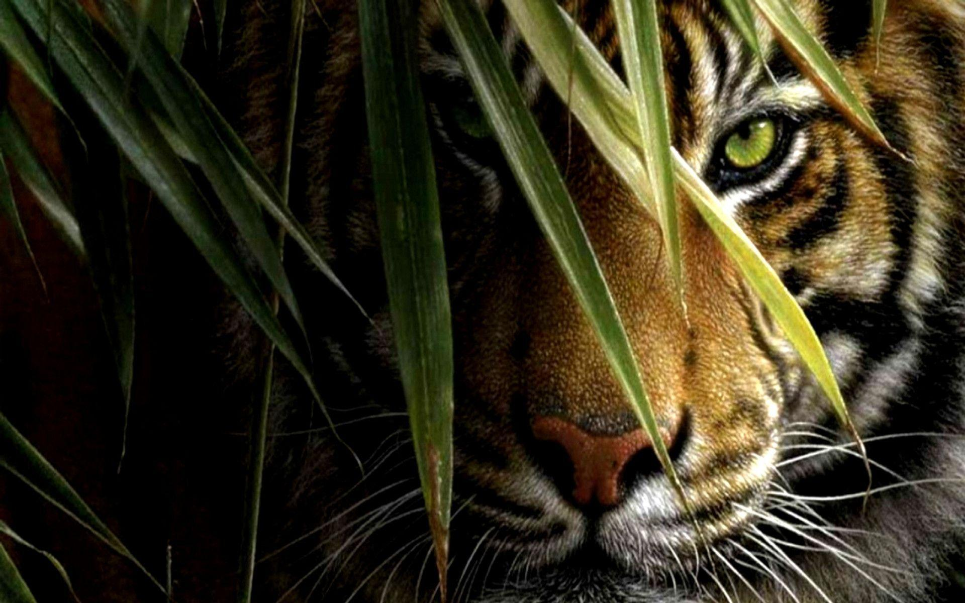 black tiger hd wallpapers 1080p