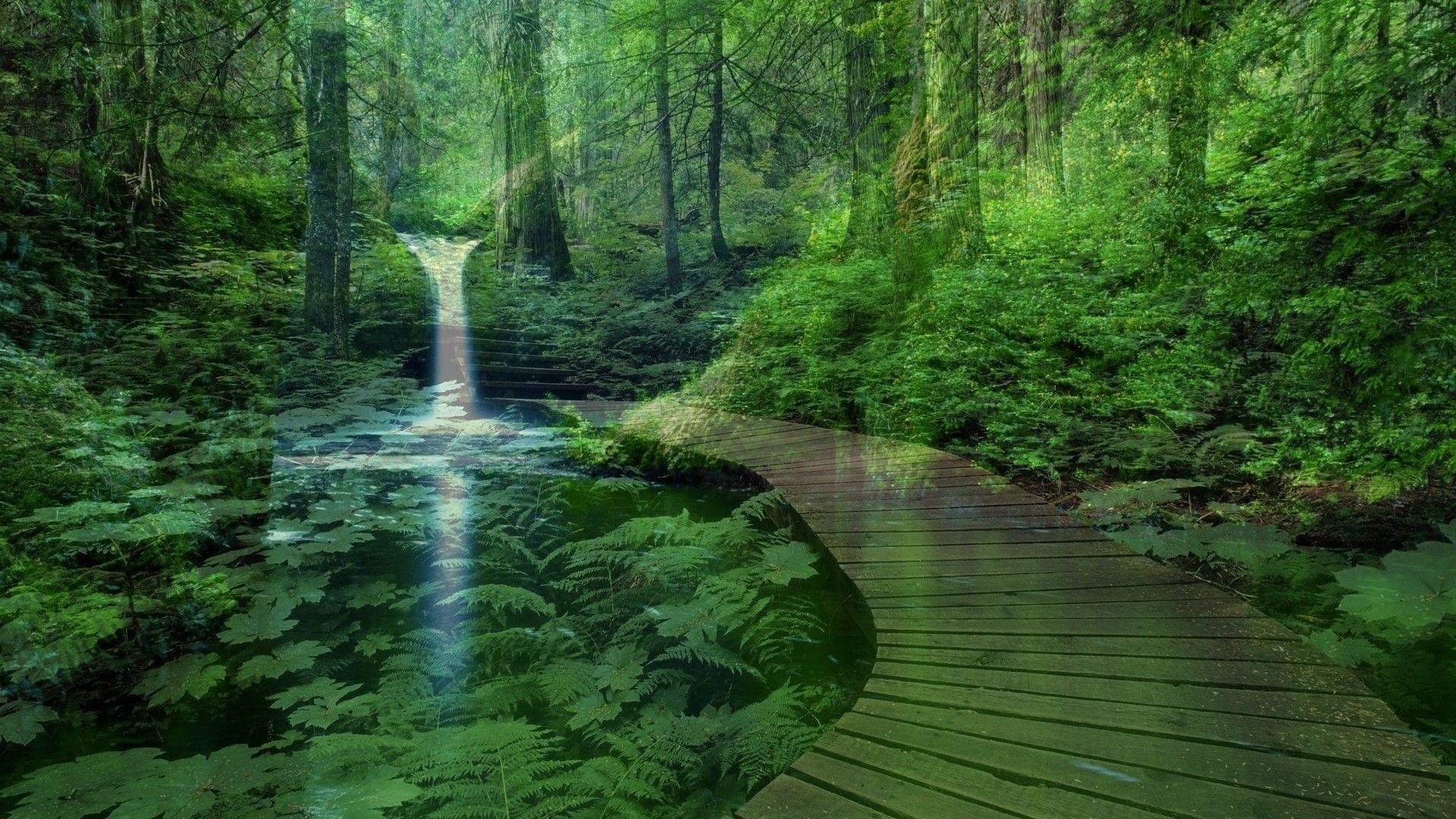 Resultado de imagem para zen nature images