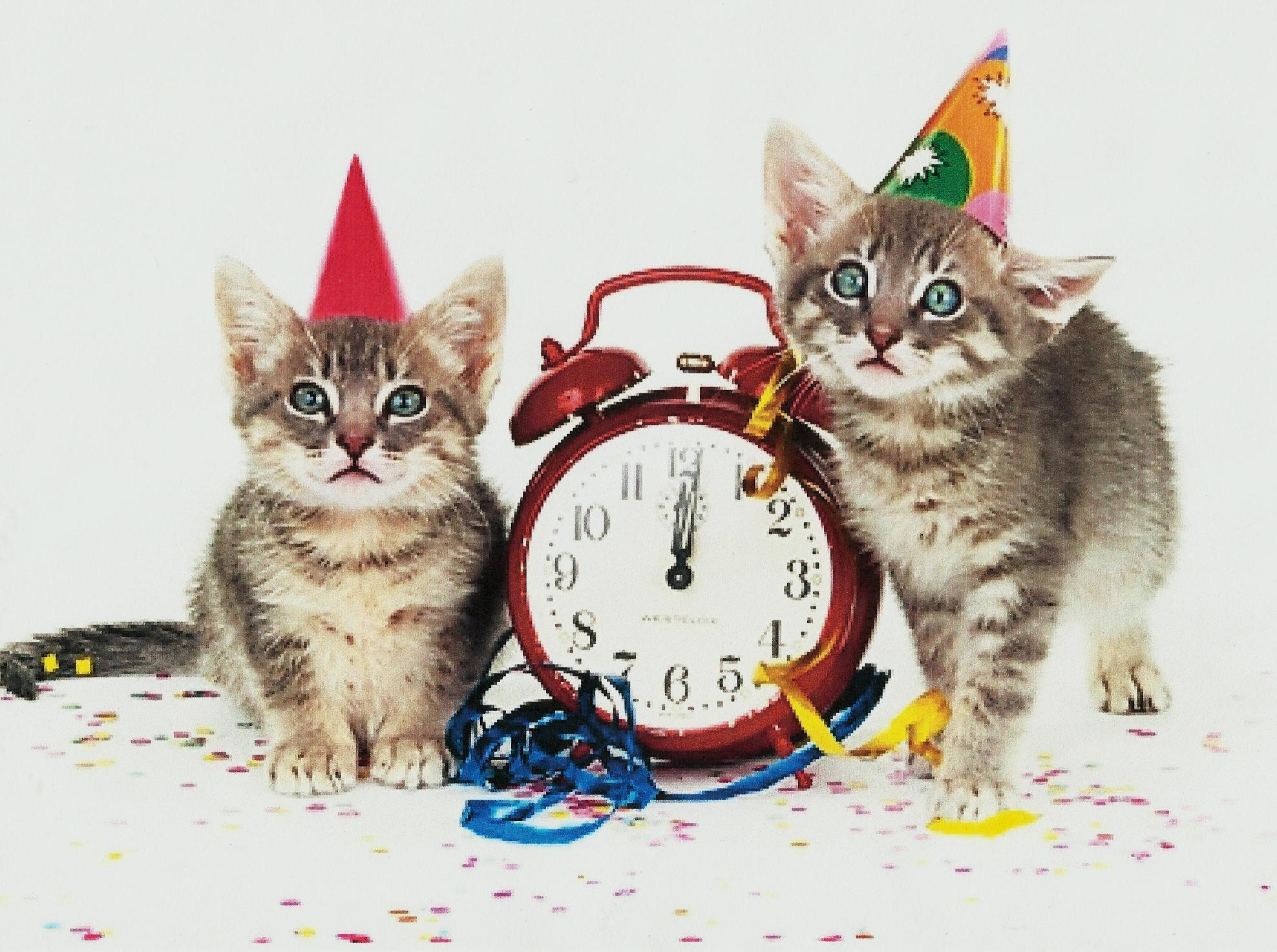 New Yearu0027s Cat Wallpapers - Top Free New Yearu0027s Cat Backgrounds