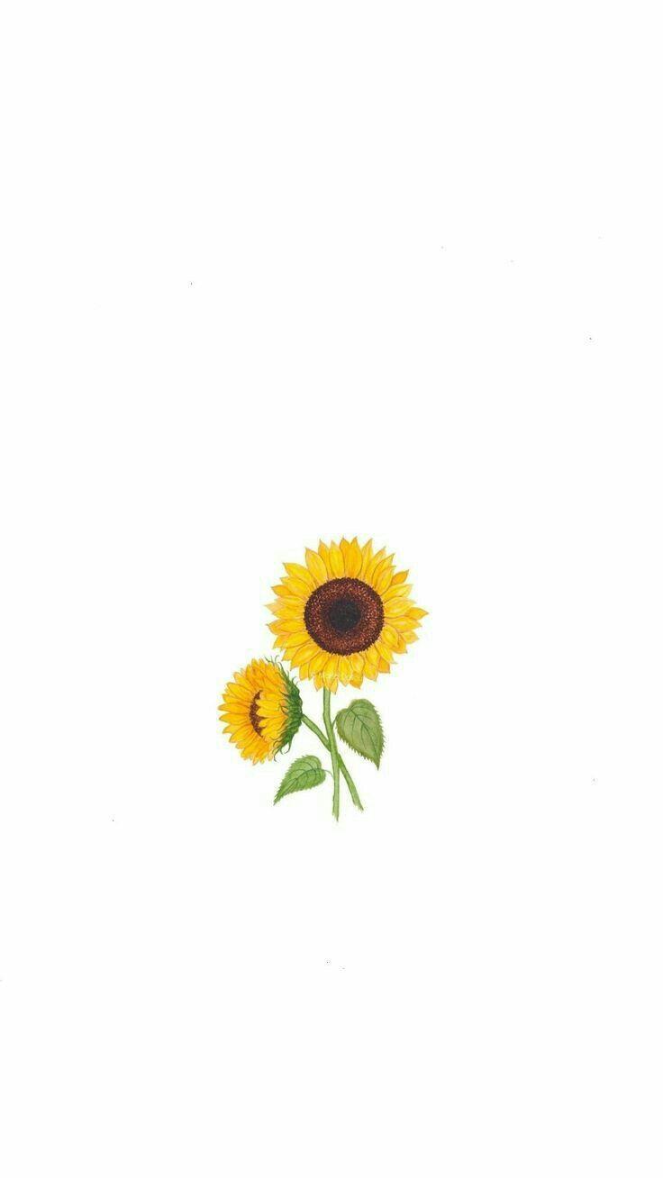 Sunflower Minimalist Wallpapers Top Free Sunflower Minimalist Backgrounds Wallpaperaccess