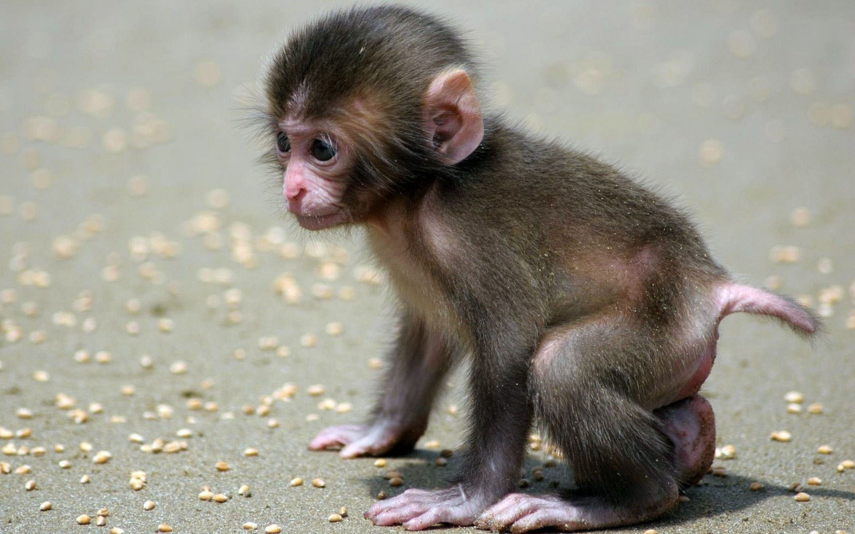 1280x960 Cute Monkey Backgrounds Group 53
